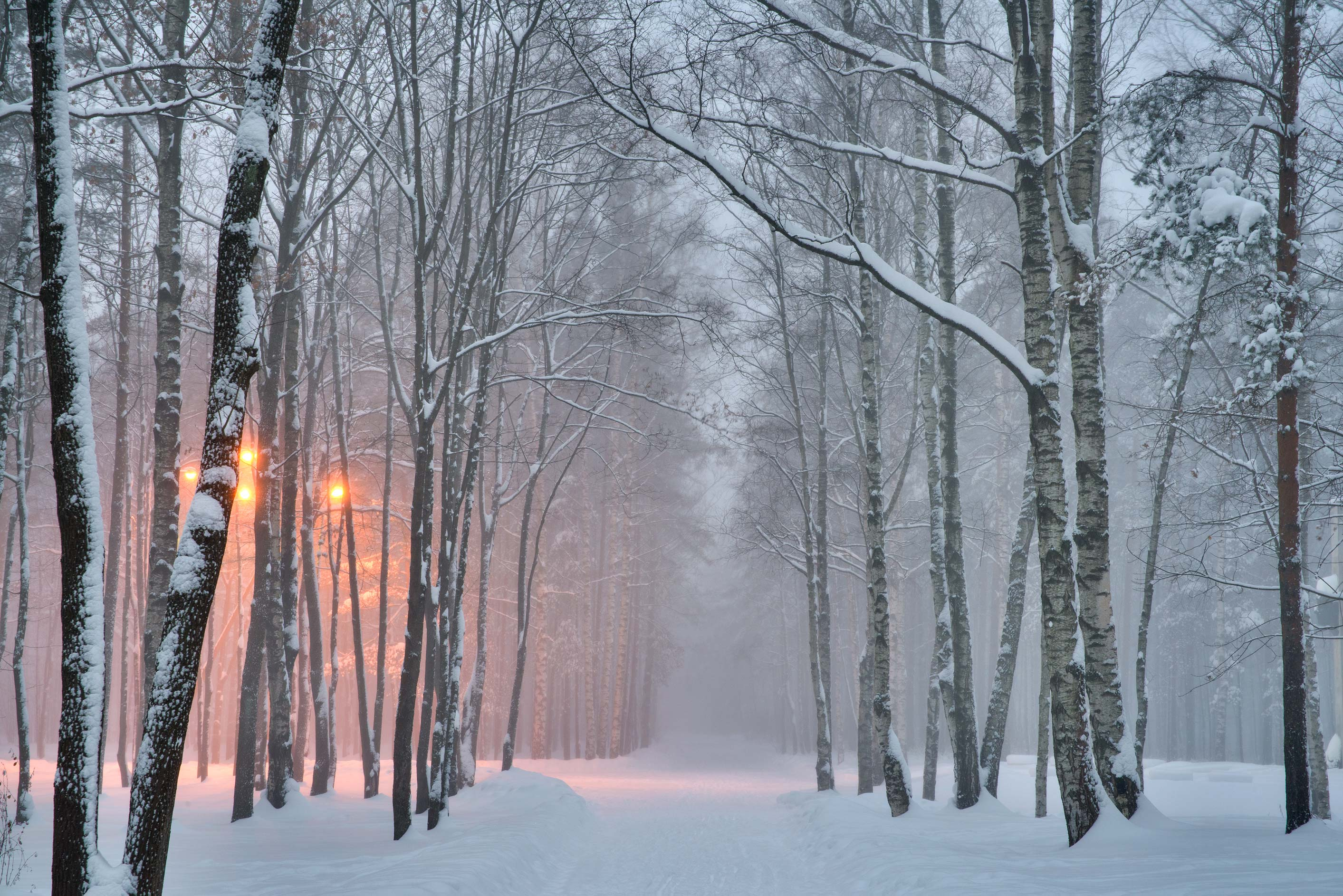 Snowy road at evening in Sosnovka Park. St.Petersburg, Russia