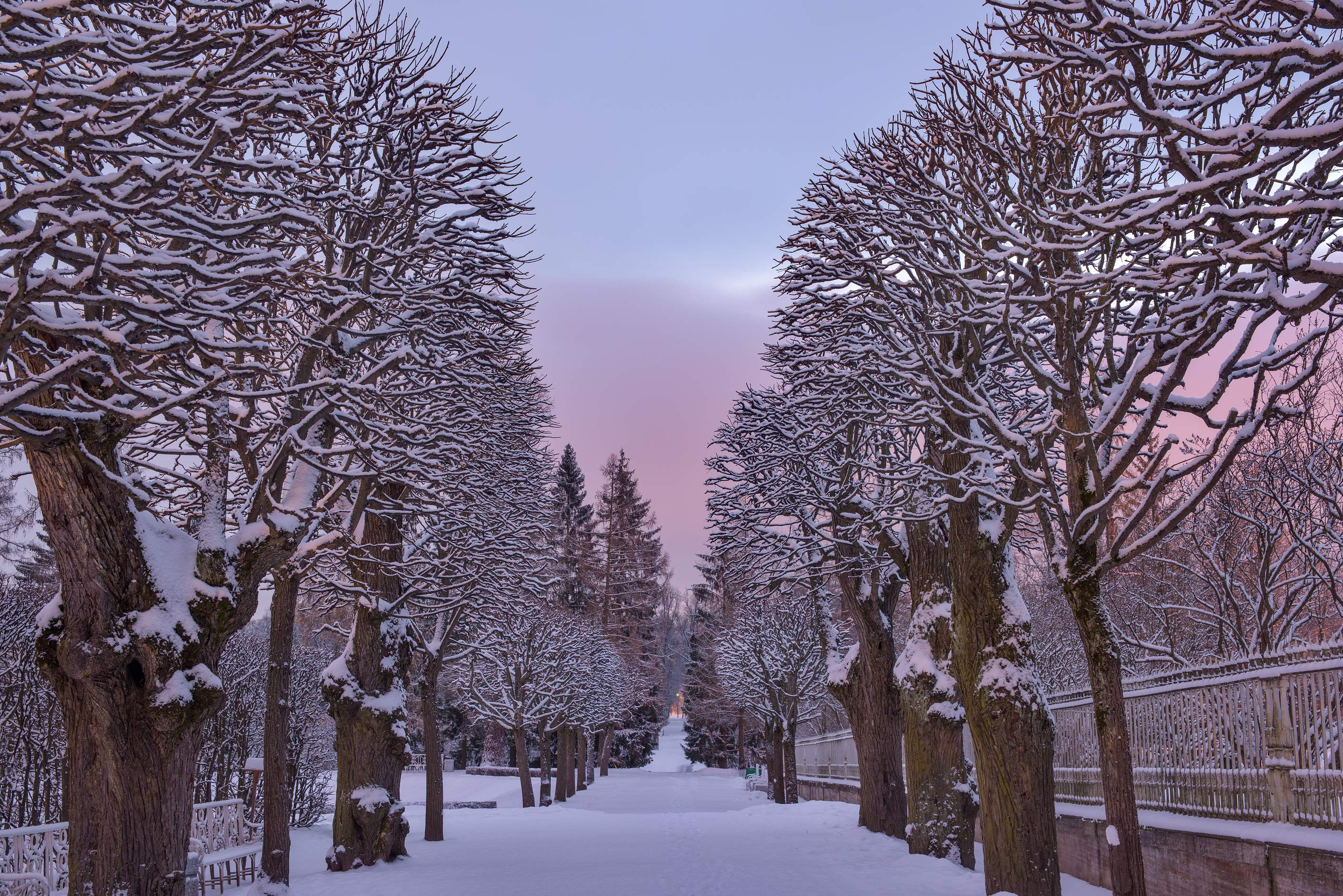 Linden alley in Parterre in Catherine Park...Selo) near St.Petersburg, Russia