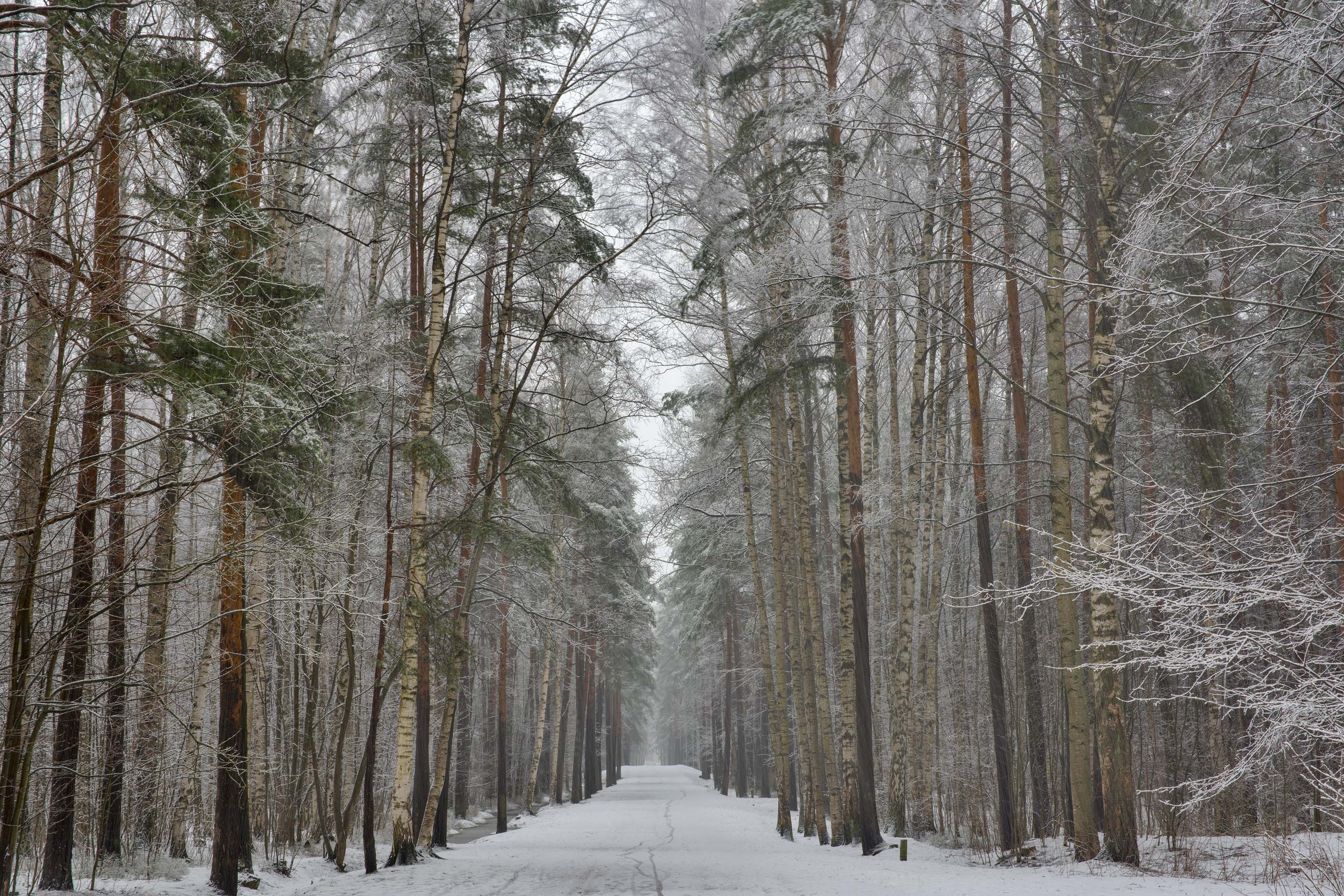 Alley with snow in Sosnovka Park. St.Petersburg, Russia