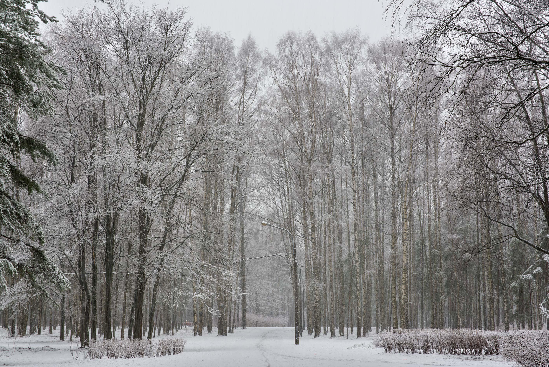 photo 202514 snowy road in sosnovka park stpetersburg