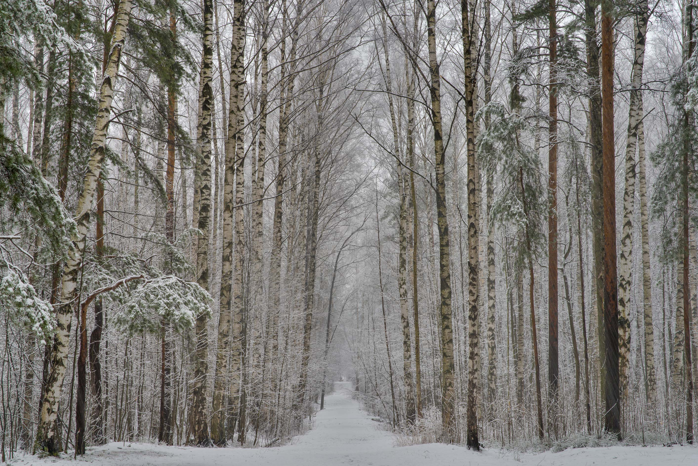 Snowy path in Sosnovka Park. St.Petersburg, Russia