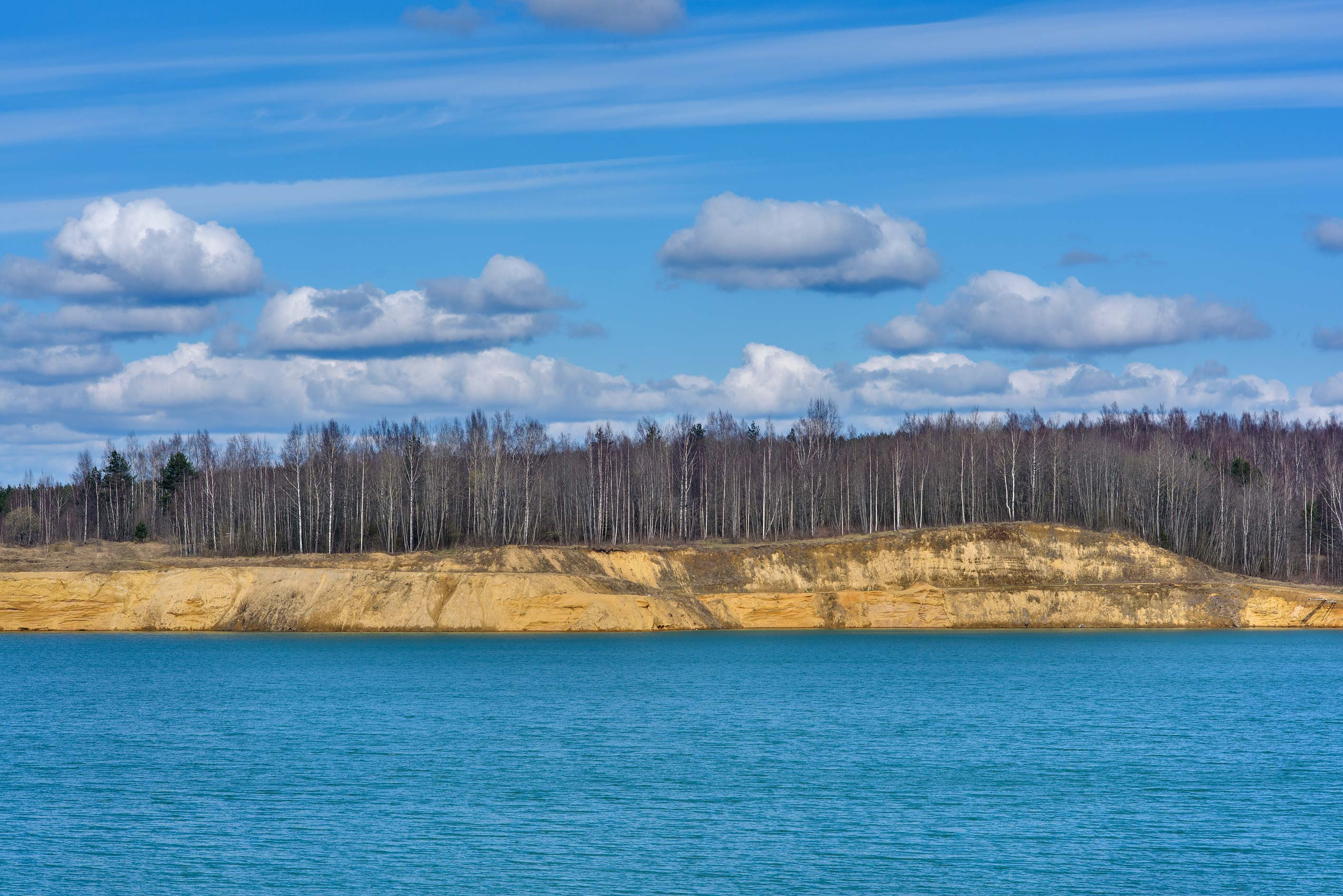 Forest on north side of Kuzmolovo Quarry north from St.Petersburg. Russia