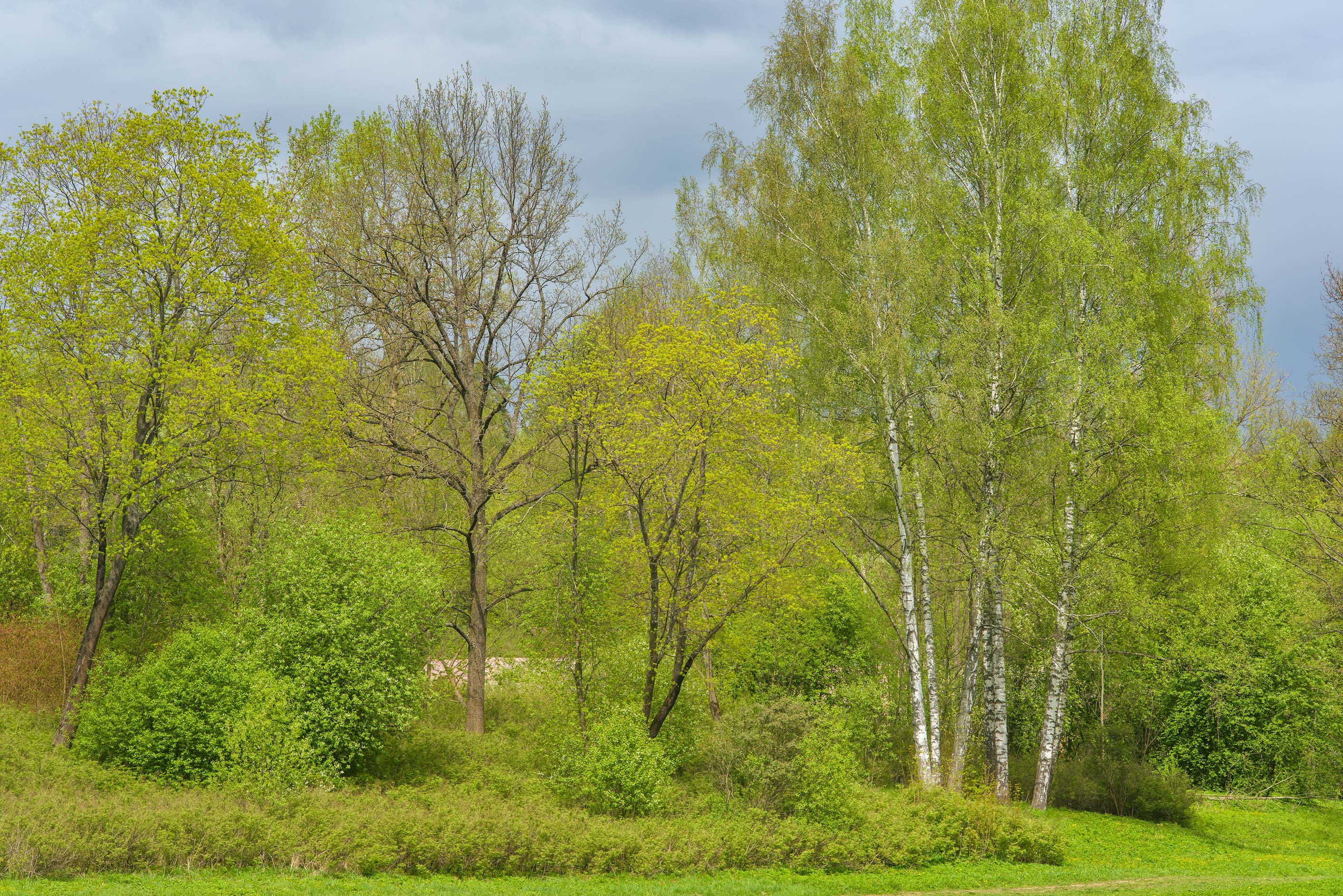 Trees near Pilbashennaya Alley in Pavlovsk Park. Pavlovsk, suburb of St.Petersburg, Russia