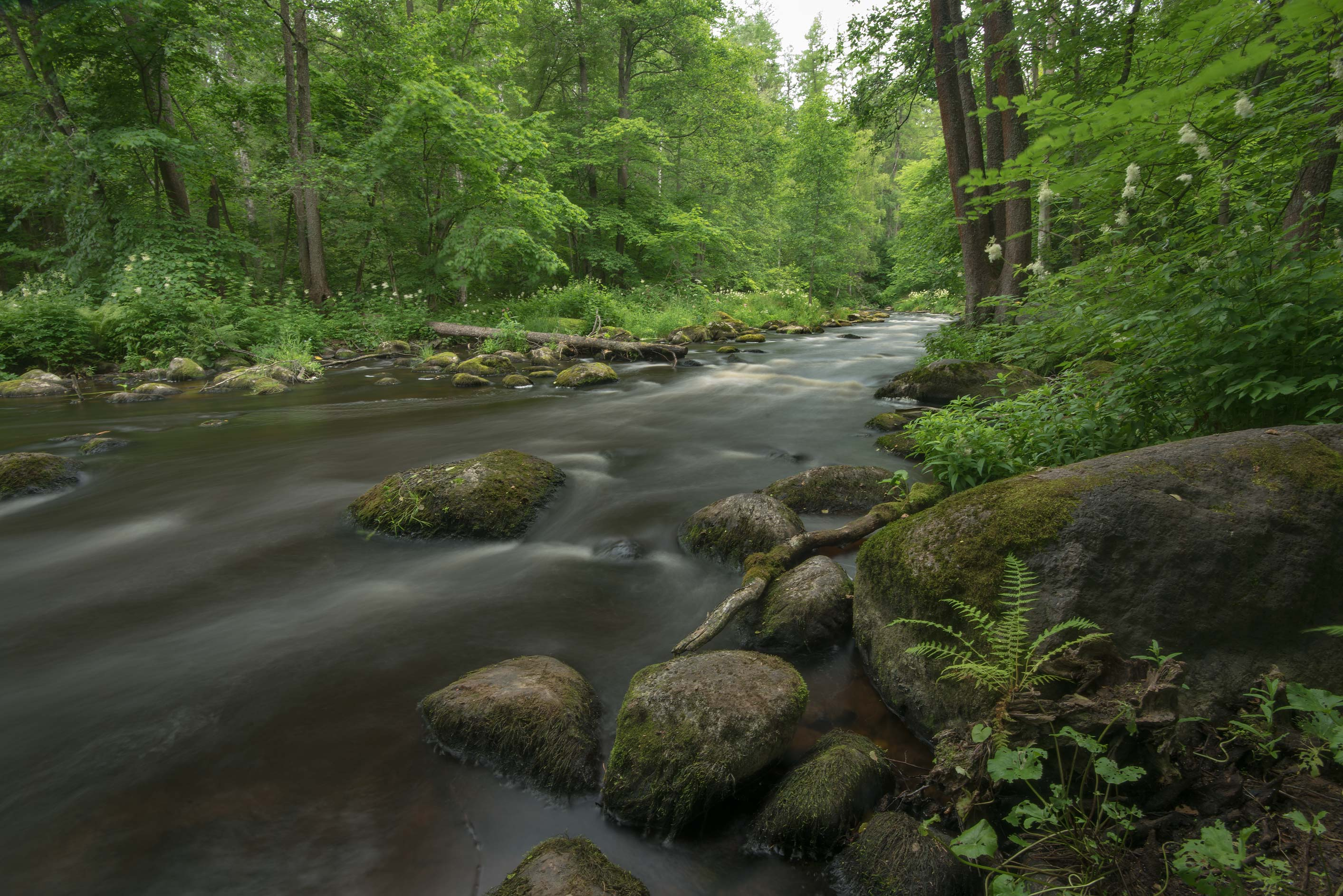Roshchinka River in a forest in Lindulovskaya...north-west from St.Petersburg. Russia