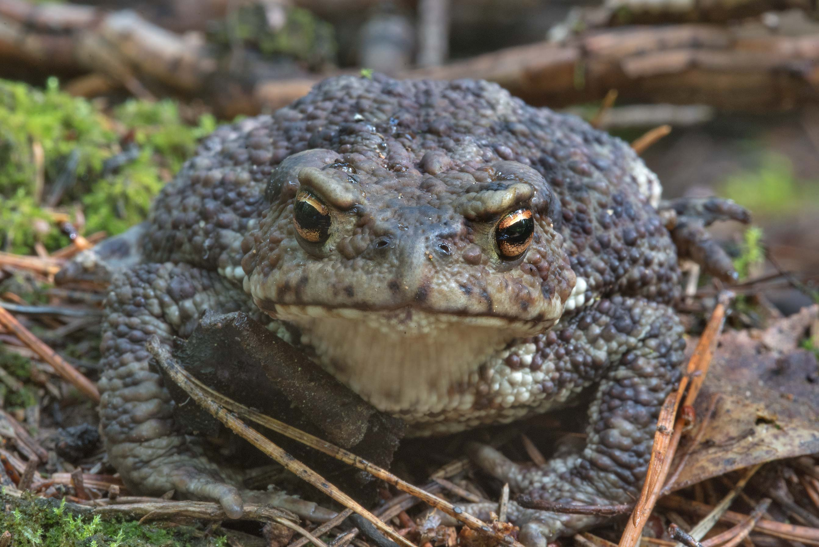 Toad's face in Lembolovo, 35 miles north from St.Petersburg. Russia