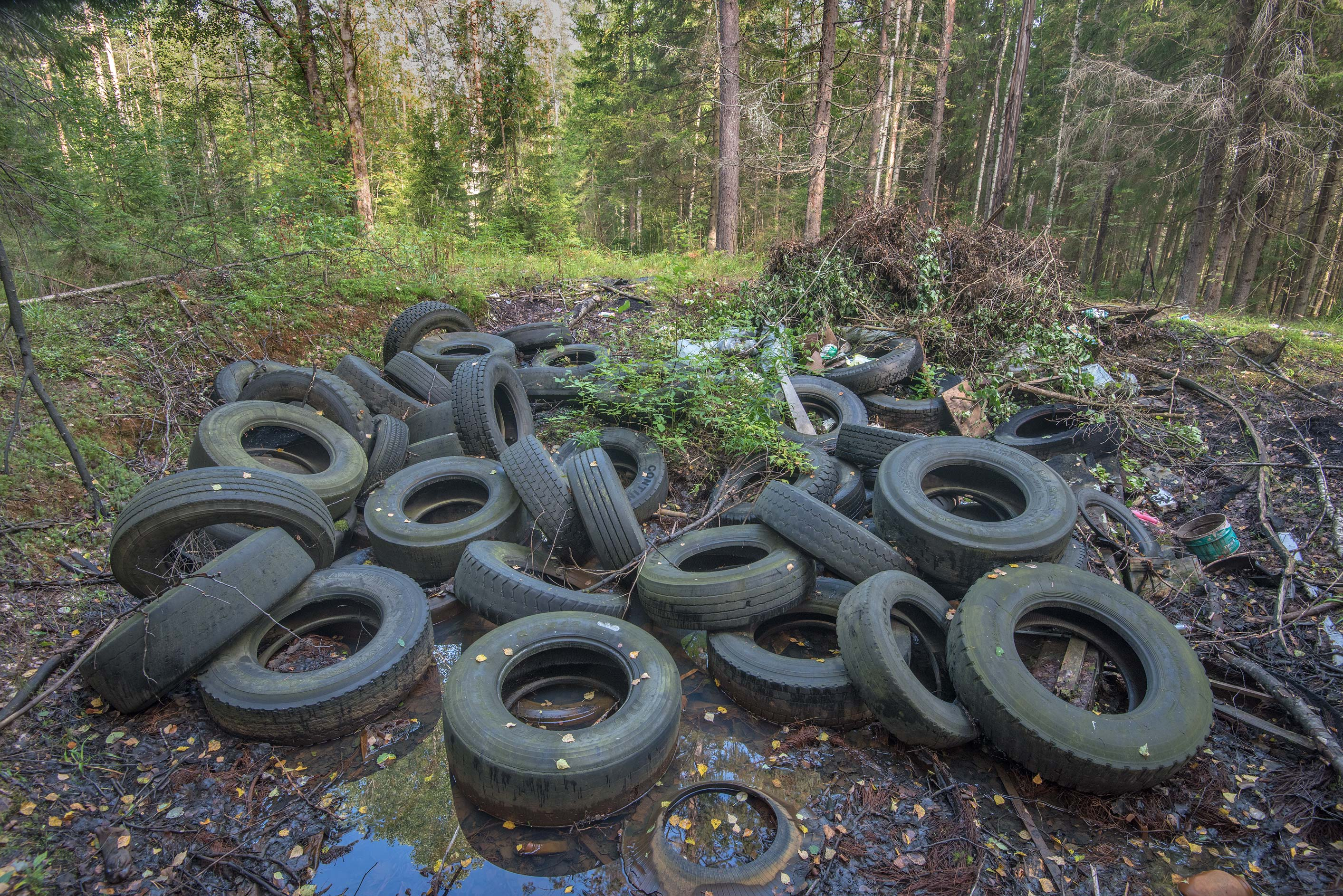 Car tires in a forest near Rappolovo and Toksovo, north from St.Petersburg. Russia