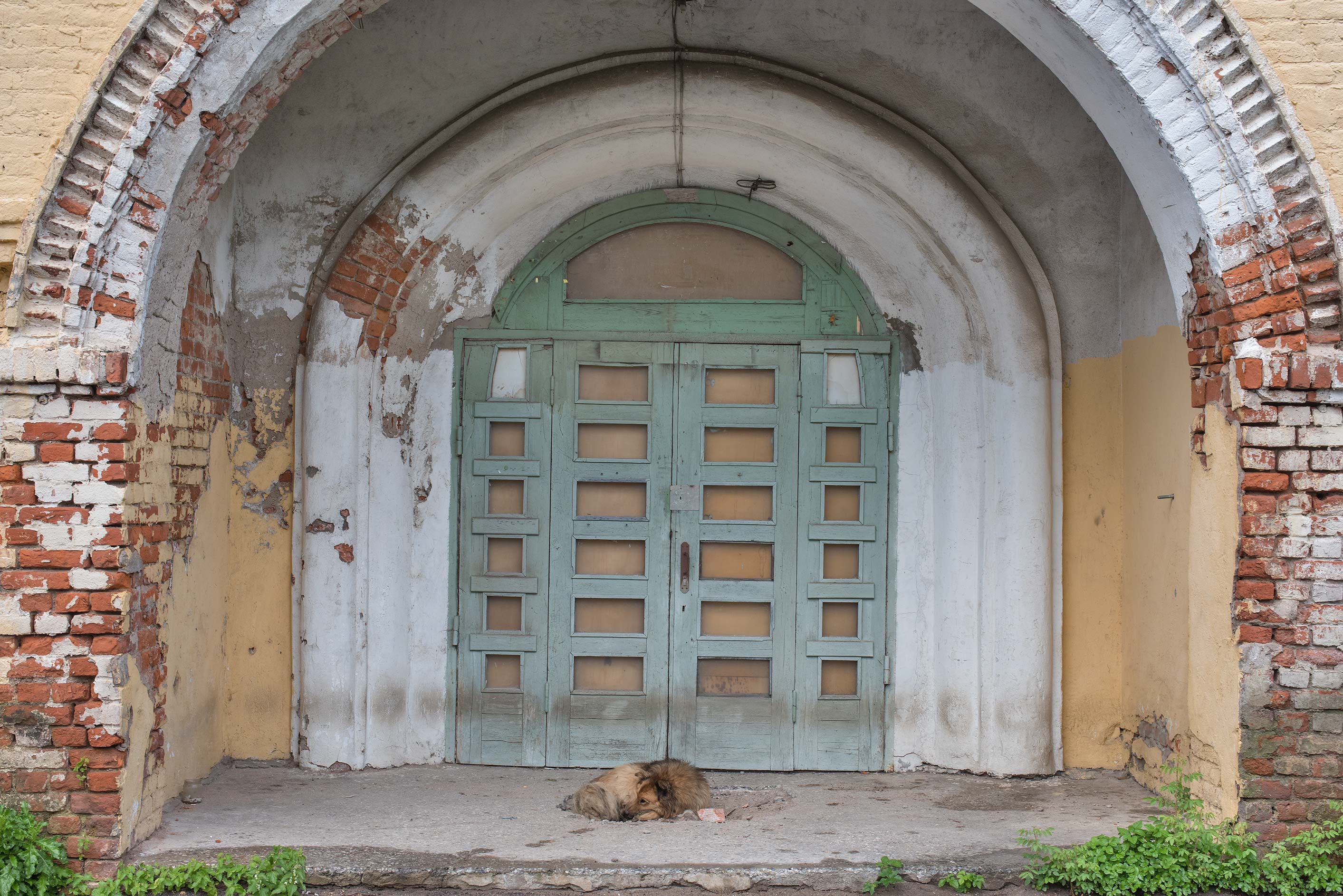Sleeping dog at the entrance of State Agrarian...Selo, near St.Petersburg. Russia