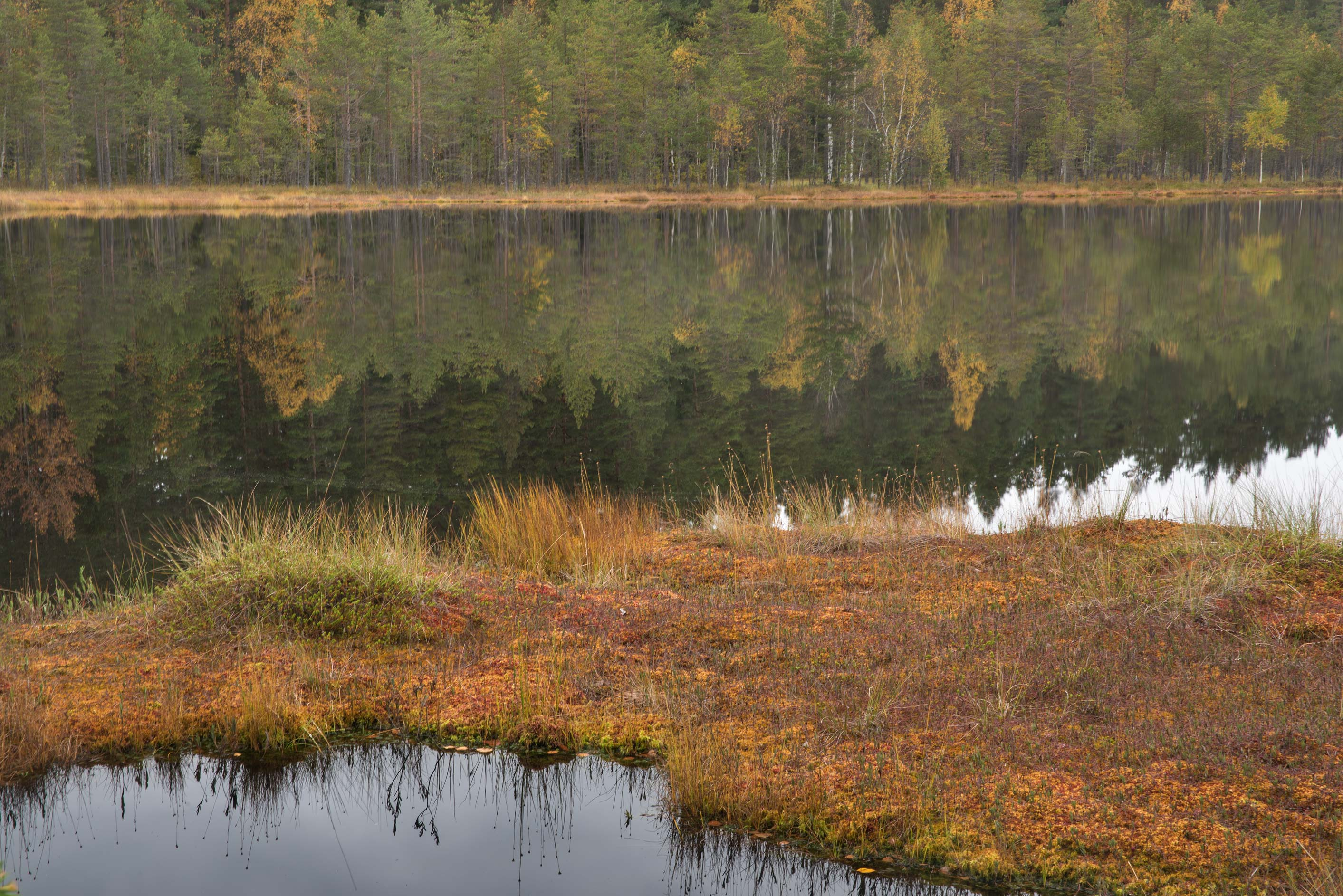 Forest reflections in Dve Sestry Lake in Boloto...north-west from St.Petersburg. Russia