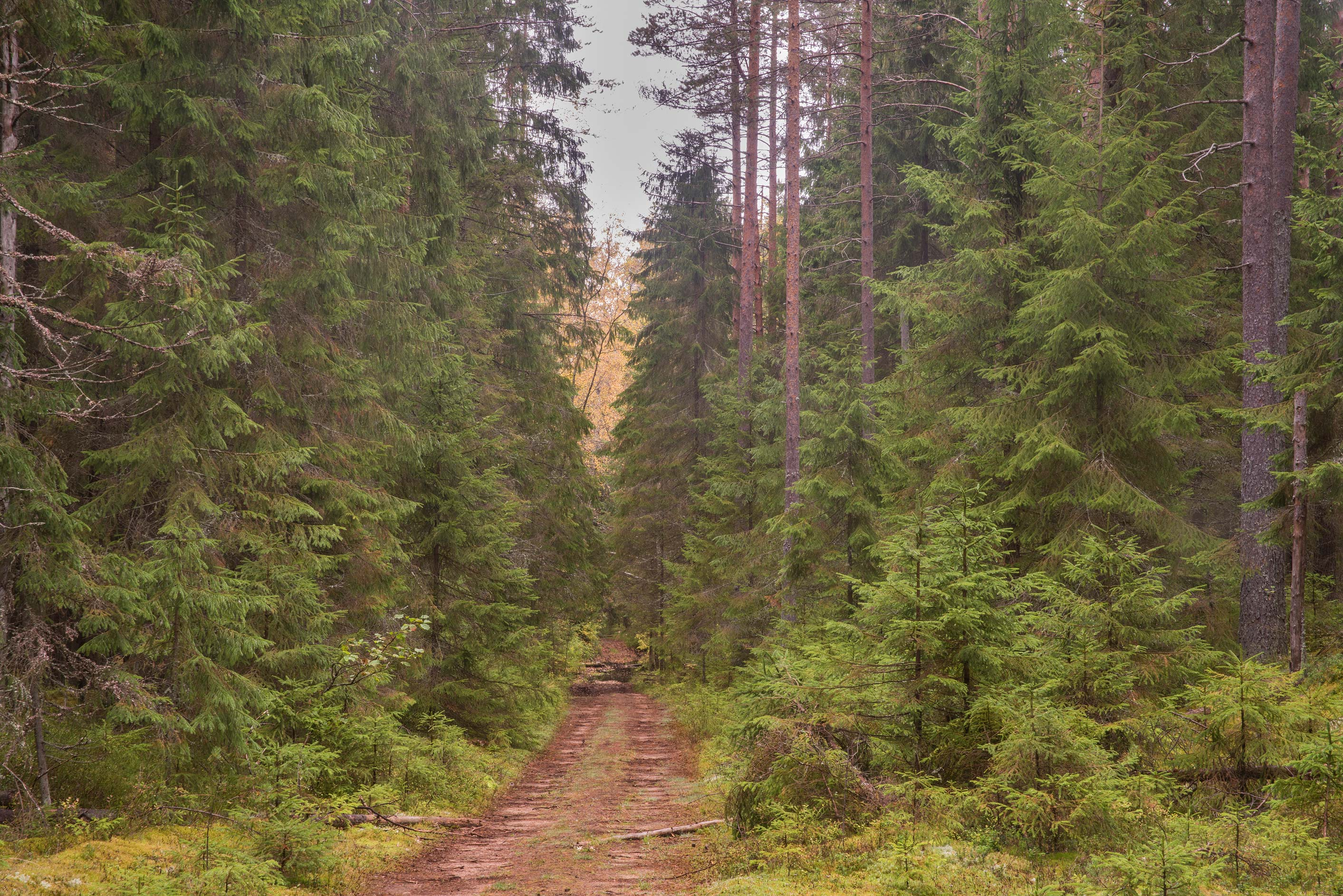 A forest near Zelenogorsk, 25 miles north-west from St.Petersburg. Russia
