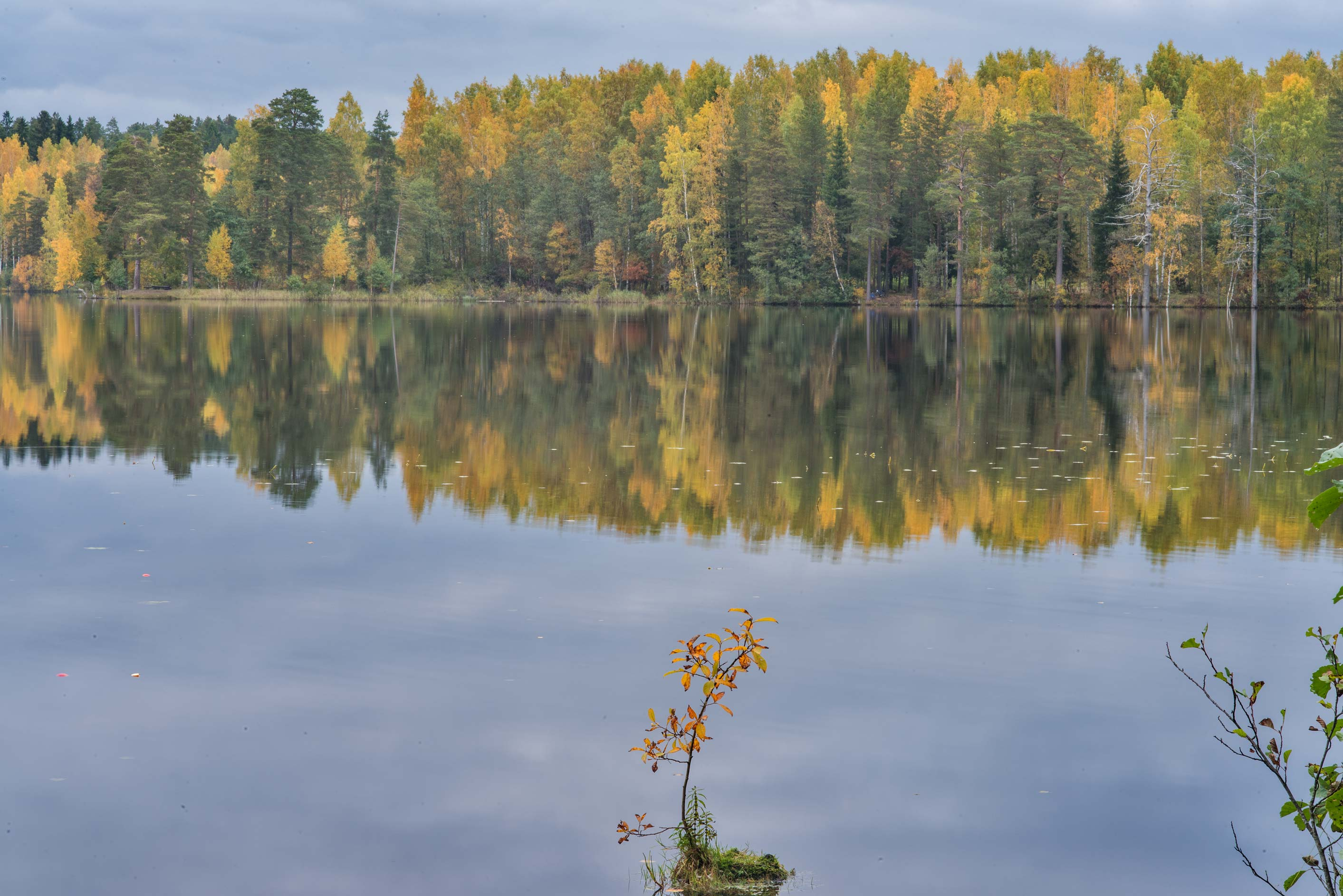 Reflections of fall colors in Shchuchye Lake near...north-west from St.Petersburg. Russia