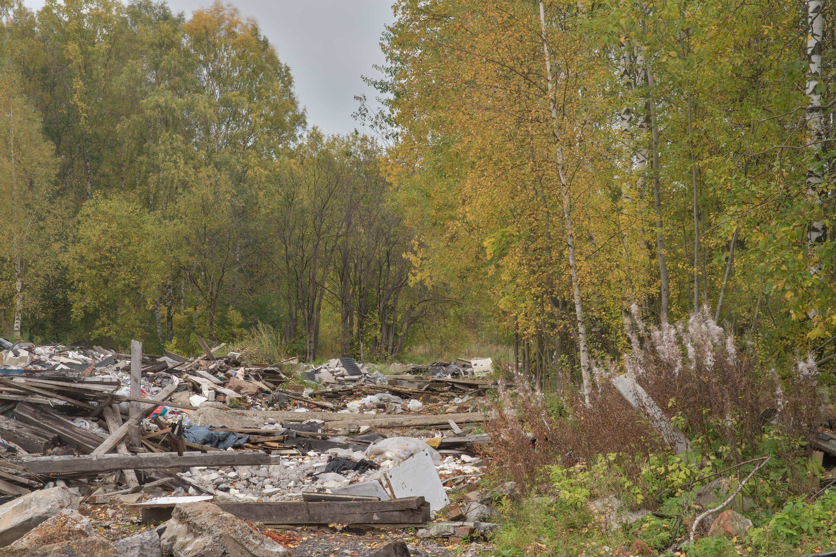 Forest near demolished garages in area of former...Sosnovka Park. St.Petersburg, Russia