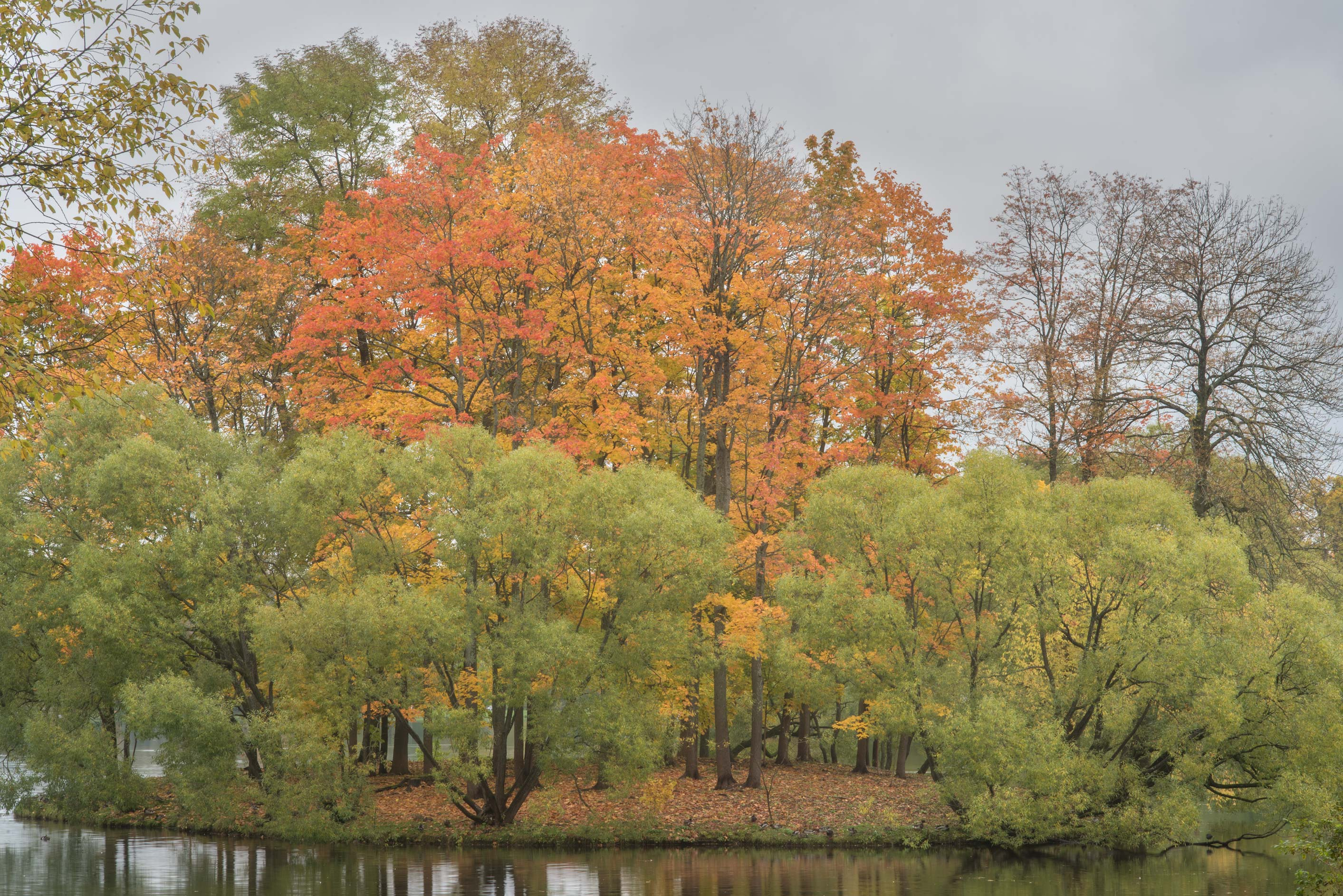 Fall colors of Empty Island of Big Pond in...south from St.Petersburg, Russia