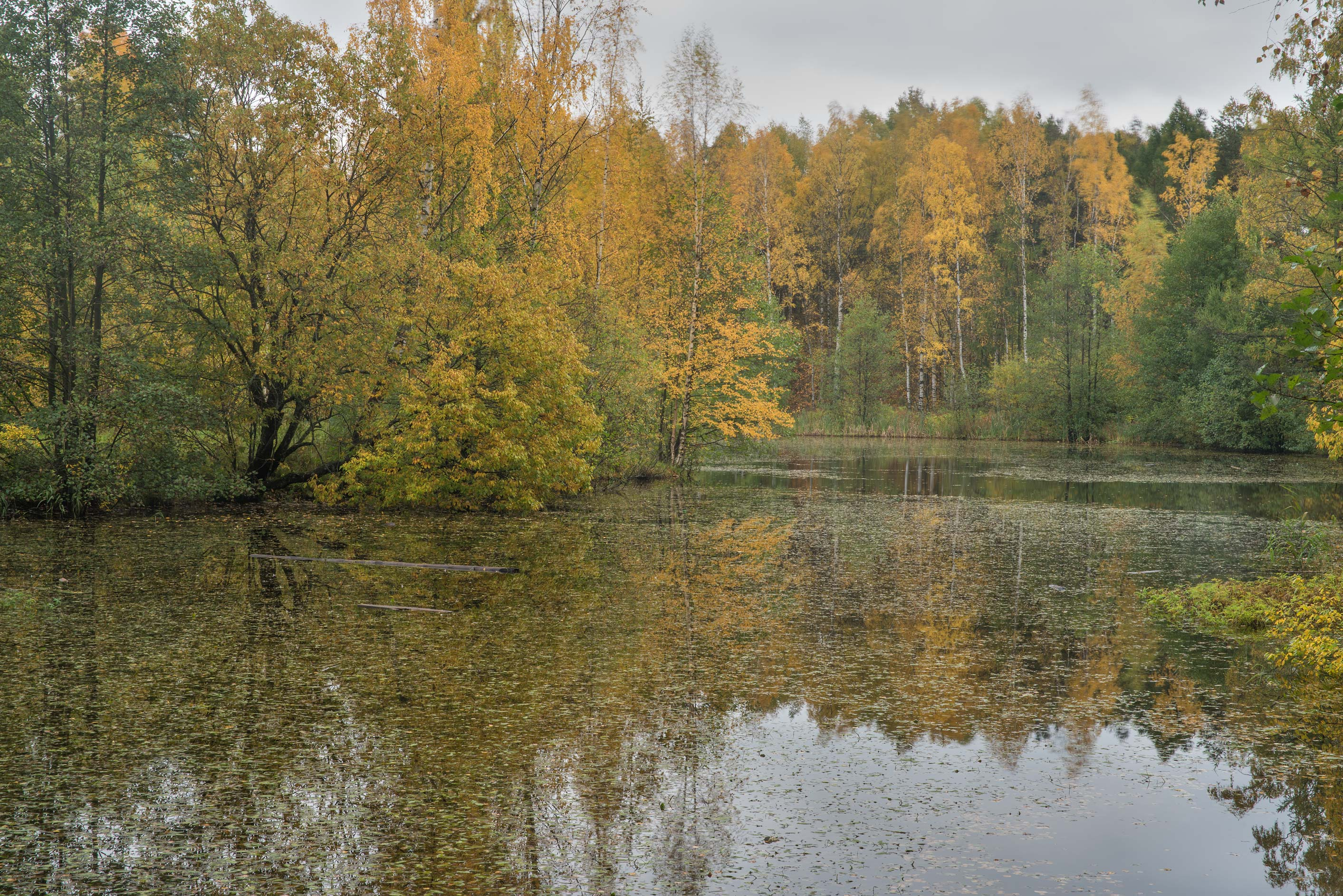 Bublik Pond in northern area in Sosnovka Park. St.Petersburg, Russia
