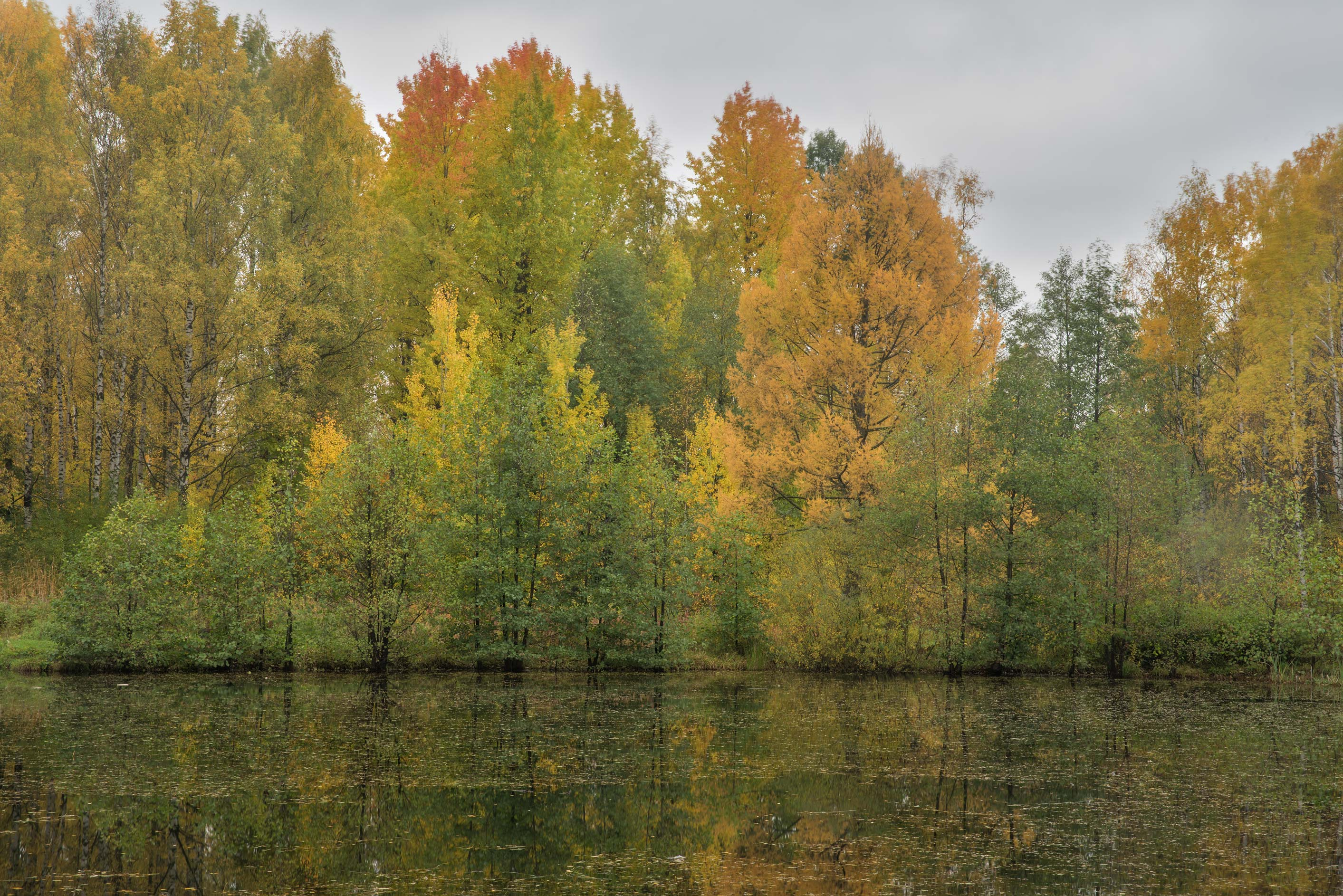 Fall colors of Bublik Pond in northern area in Sosnovka Park. St.Petersburg, Russia