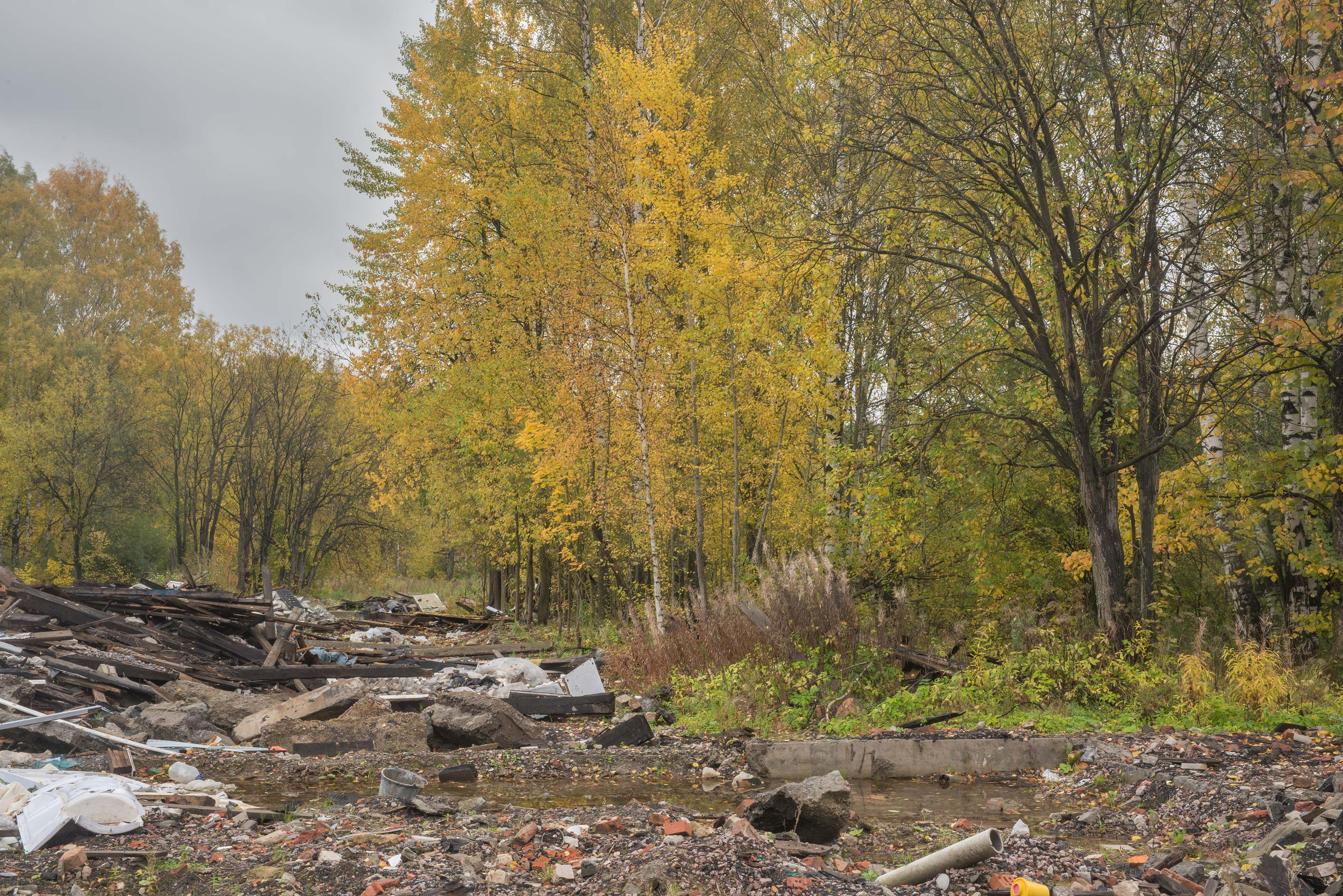 Fall colors of a forest demolished garages in...Sosnovka Park. St.Petersburg, Russia