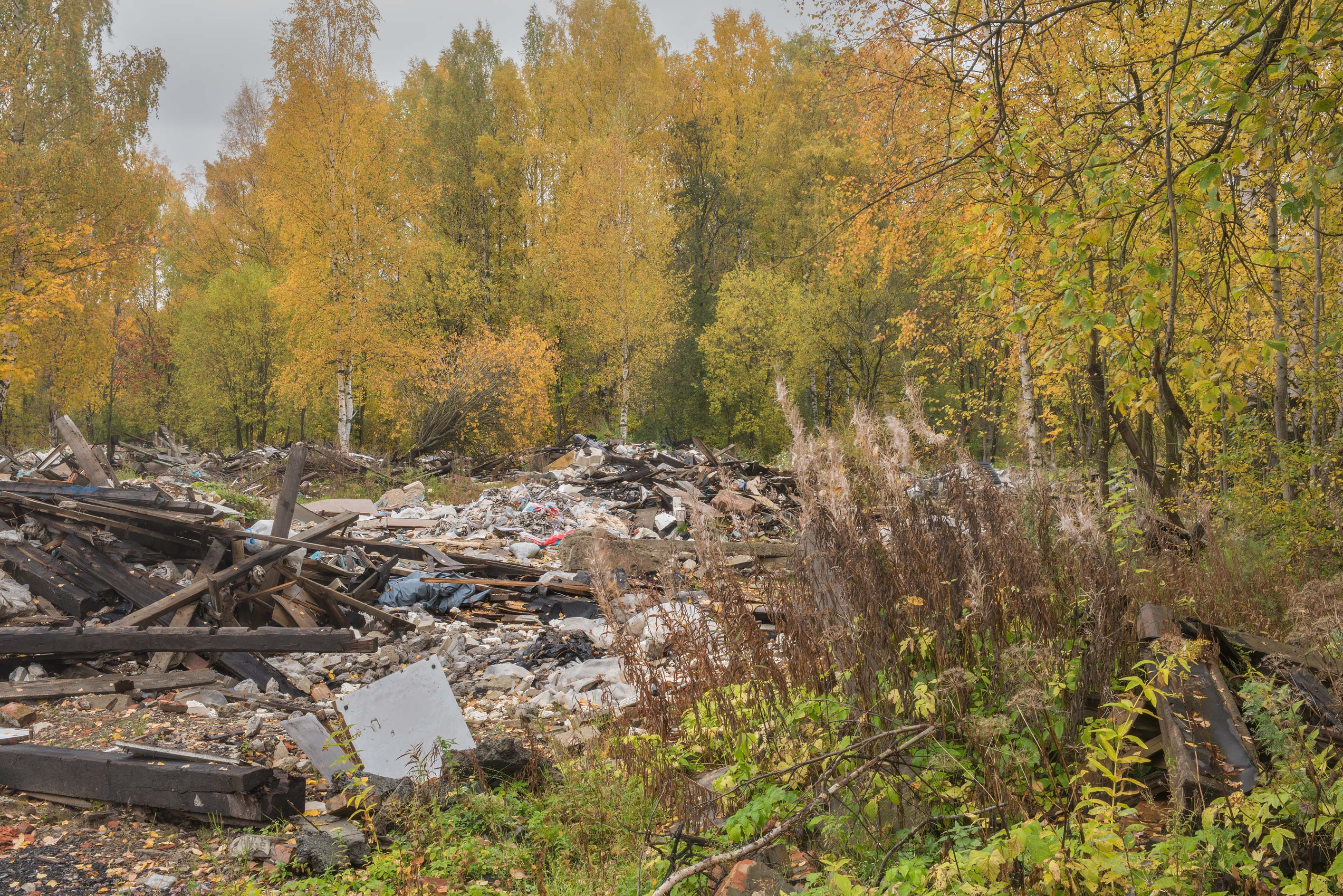 Fireweed near demolished garages in area of...Sosnovka Park. St.Petersburg, Russia
