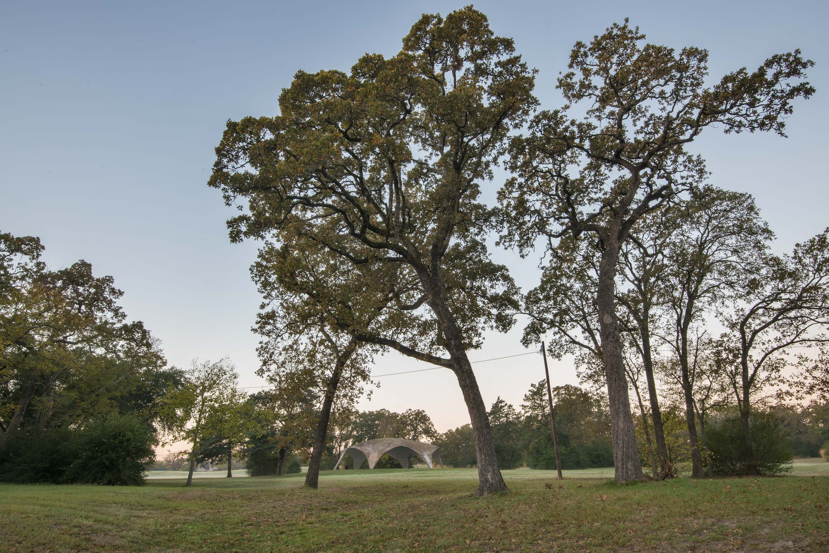 Oaks near picnic grounds in Hensel Park. College Station, Texas