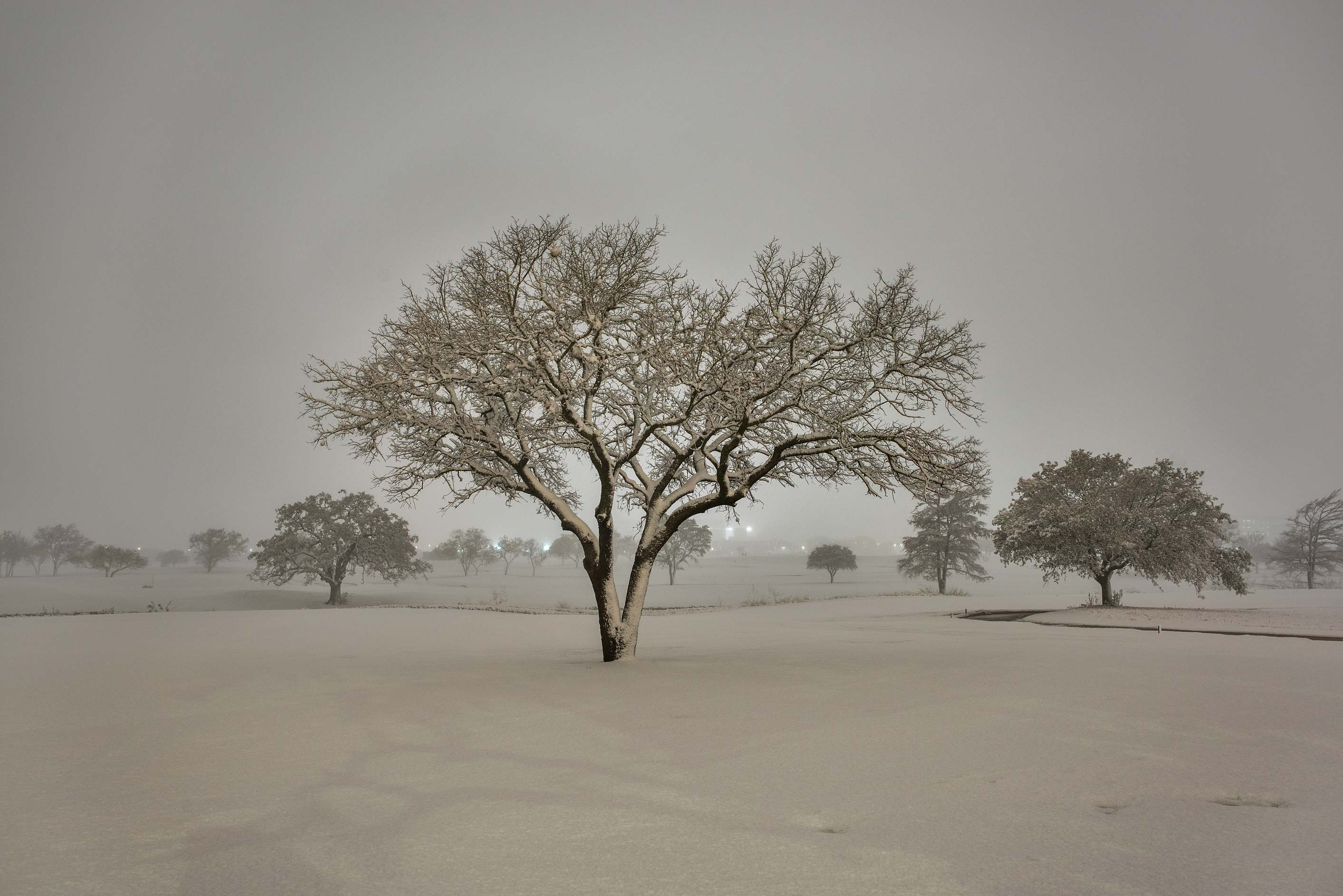 A tree with snow on the university golf course. College Station, Texas