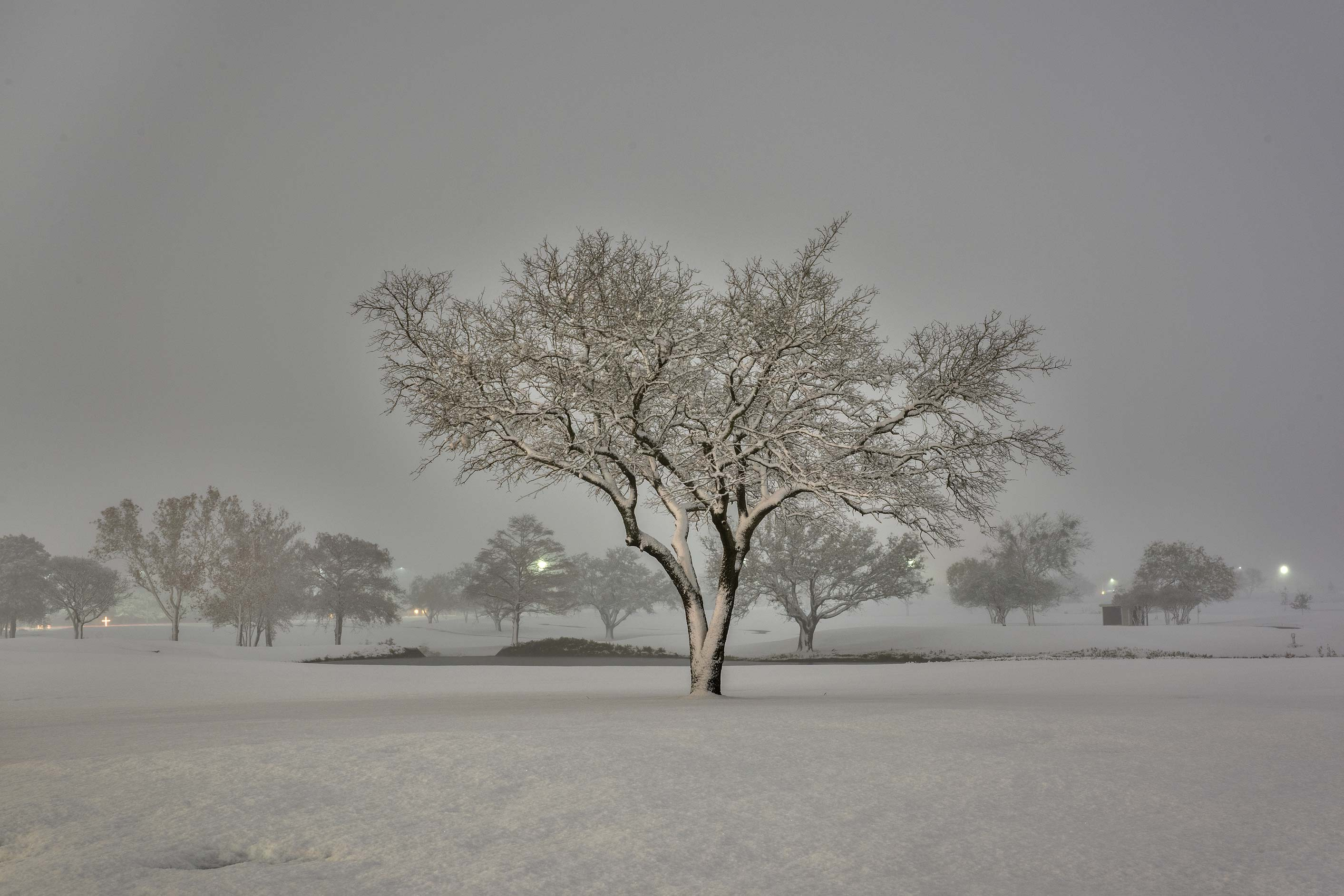Snowy trees on the university golf course. College Station, Texas