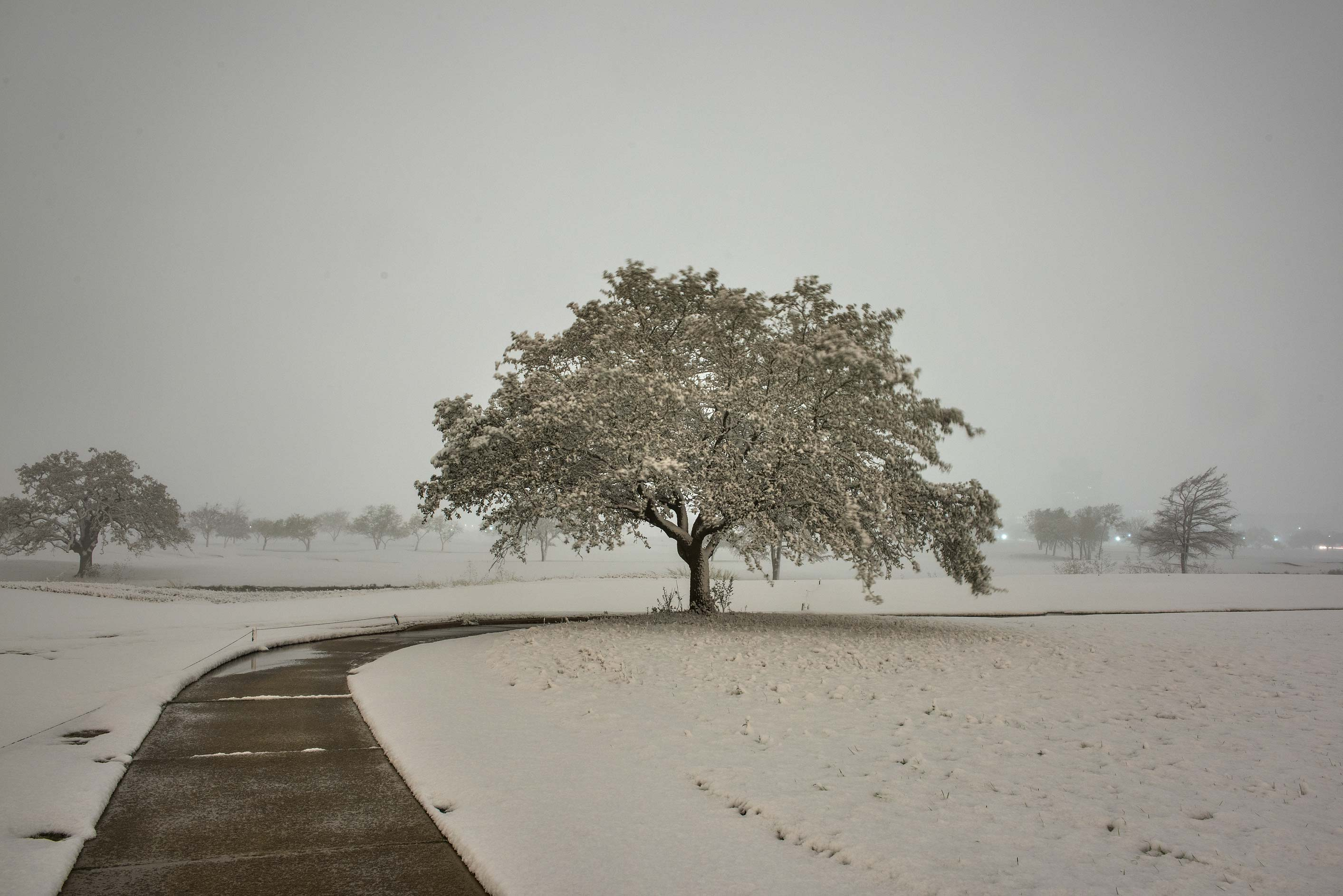 A path and a tree in snow on the university golf course. College Station, Texas