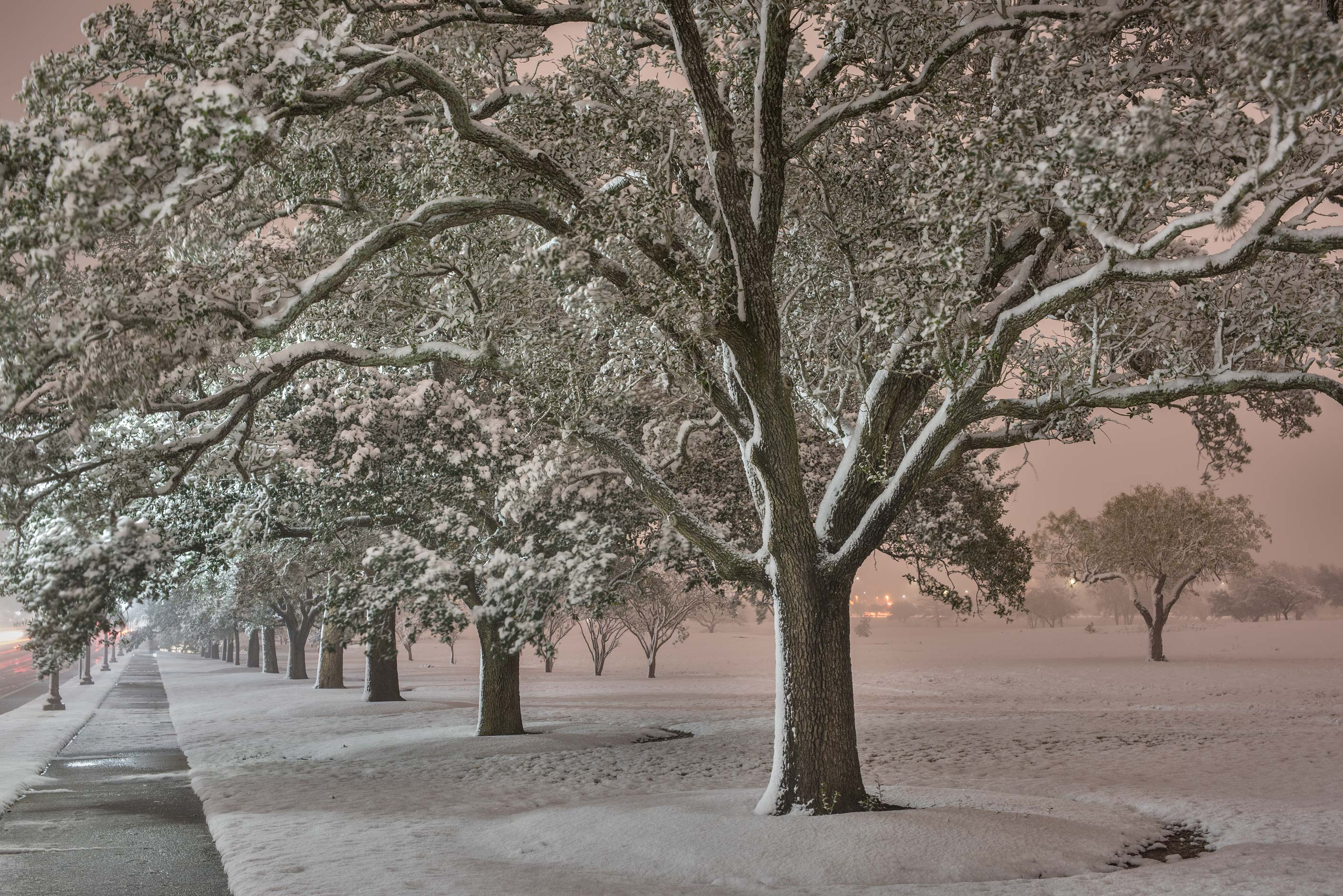 Oak alley in snow of New Main Rd. on campus of...M University. College Station, Texas