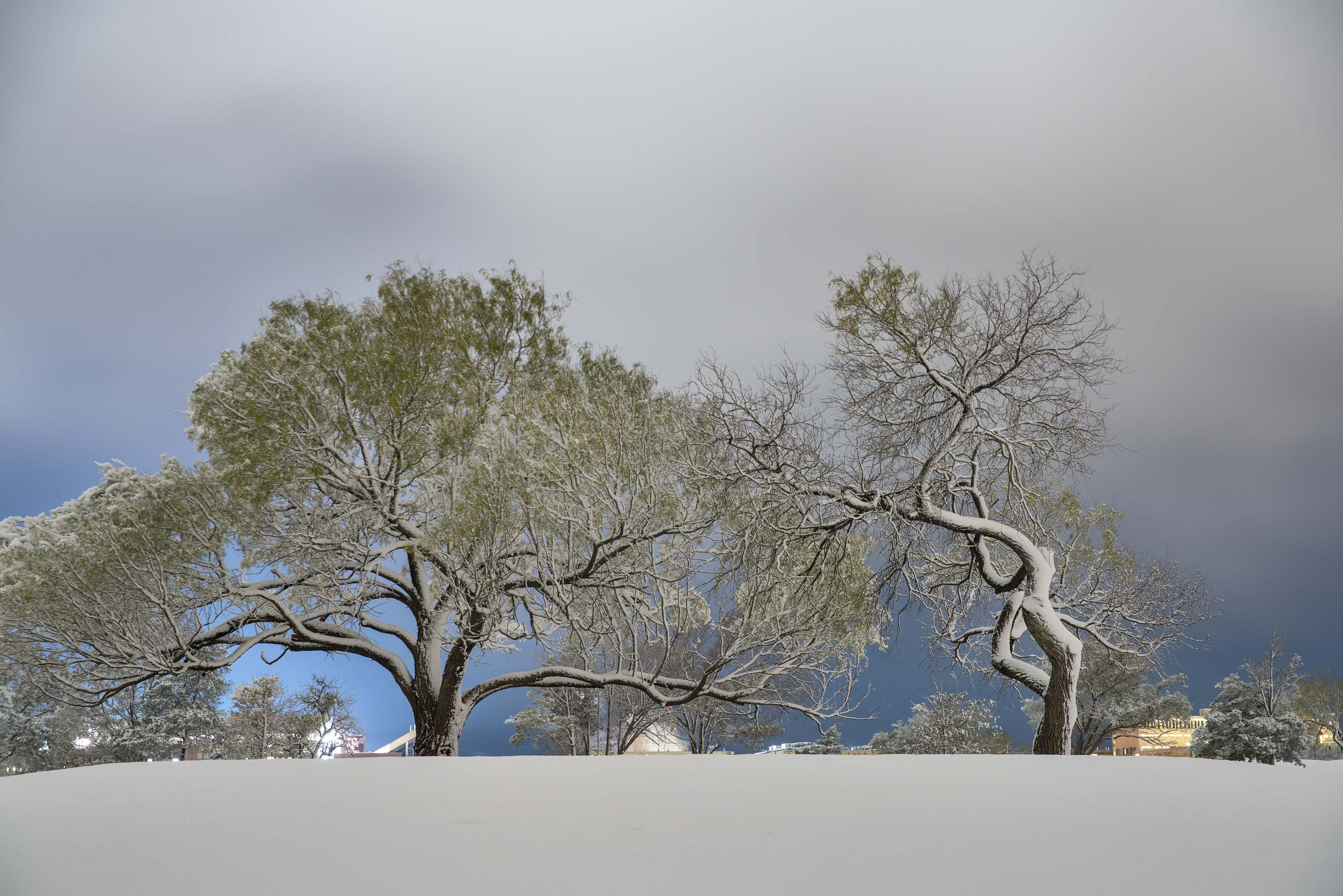Trees after a snowfall on the university golf course. College Station, Texas