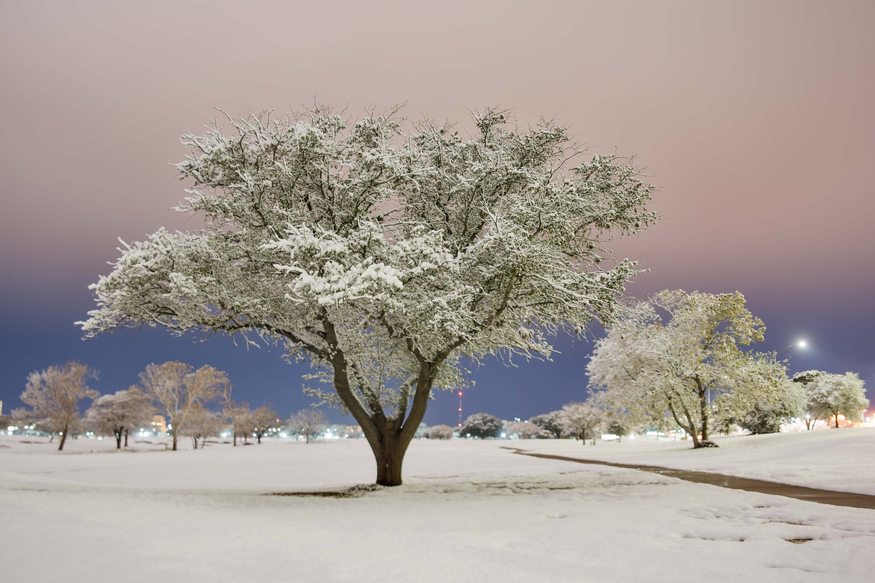 Tree and a path after a snowfall on the university golf course. College Station, Texas