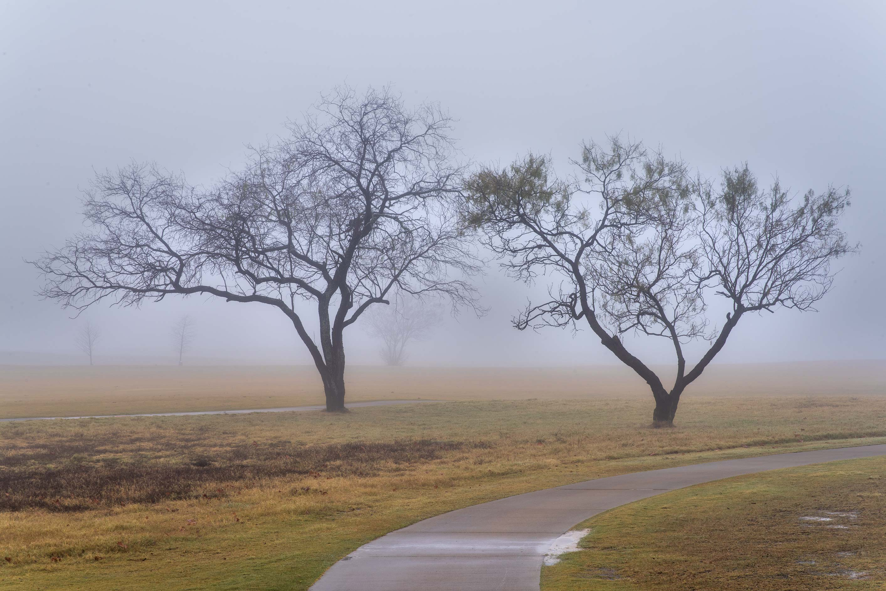 Outlines of trees near a path on Texas A&M Campus golf course. College Station, Texas