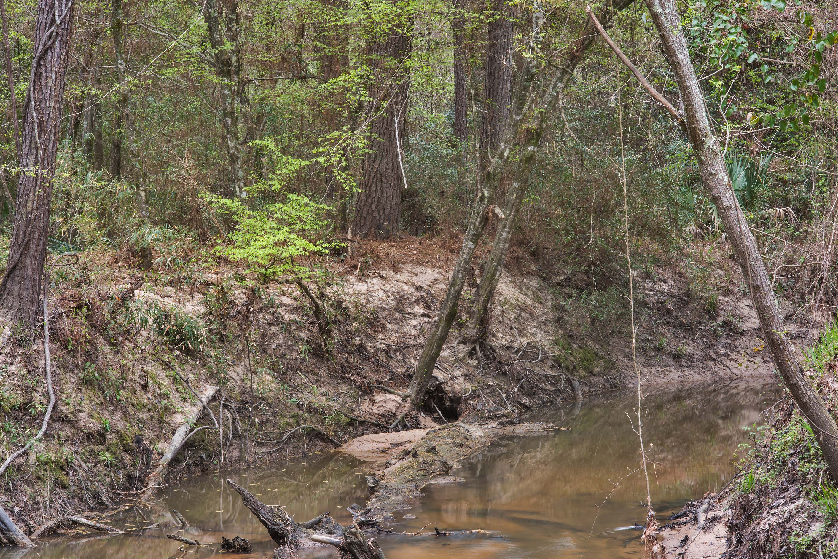 Caney Creek on Little Lake Creek Loop Trail in...Forest, near Huntsville. Texas