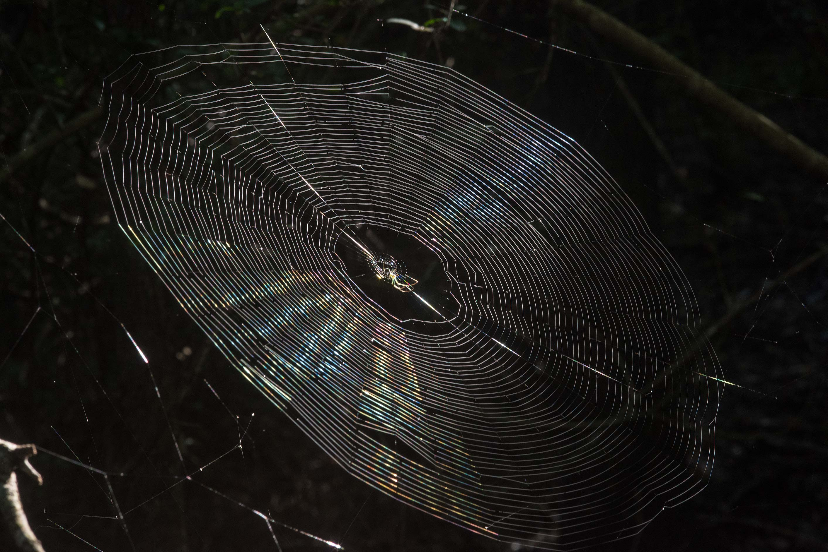 Spider's web lit by sun in Lick Creek Park. College Station, Texas