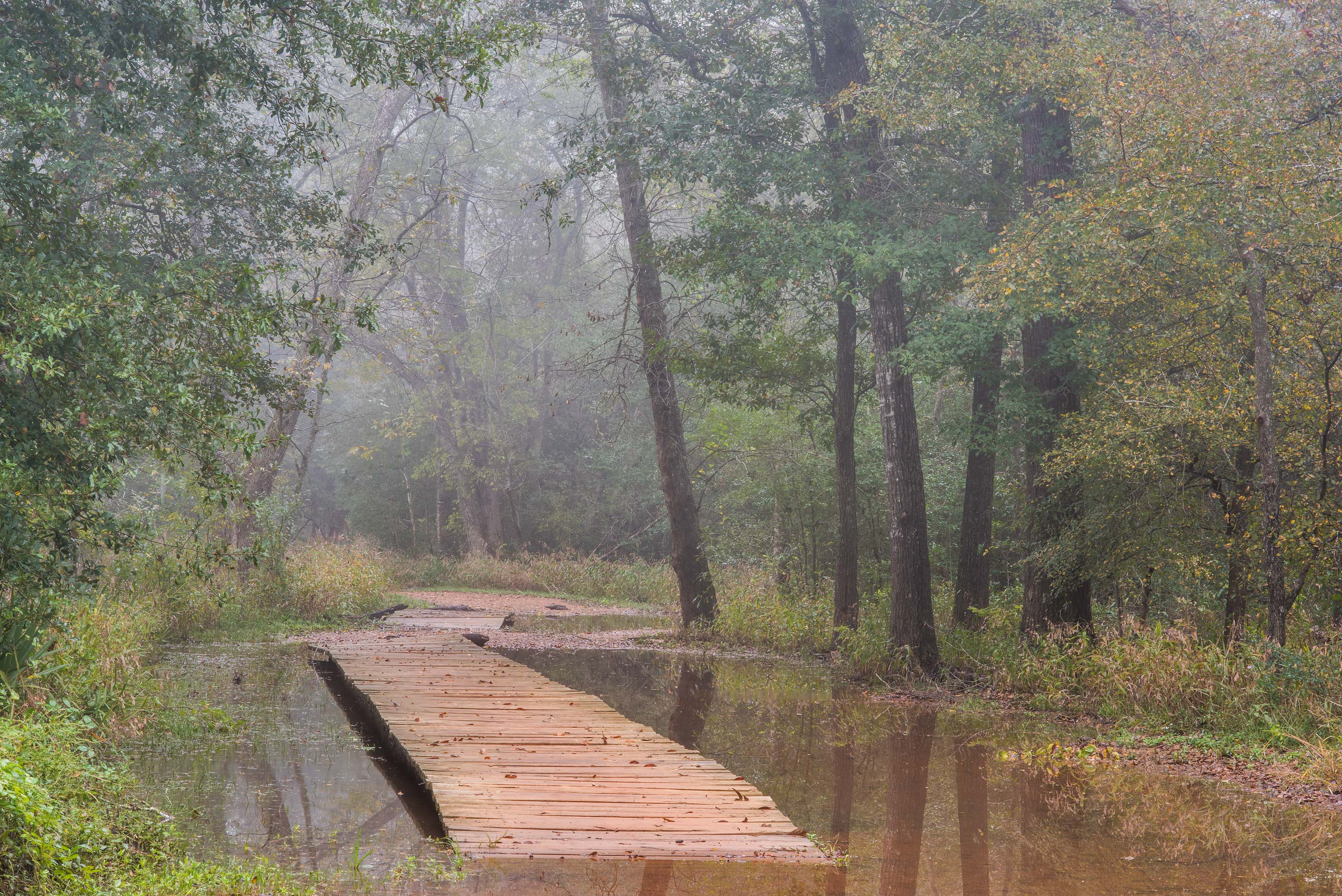 Boardwalk of Raccoon Run Trail in Lick Creek Park. College Station, Texas