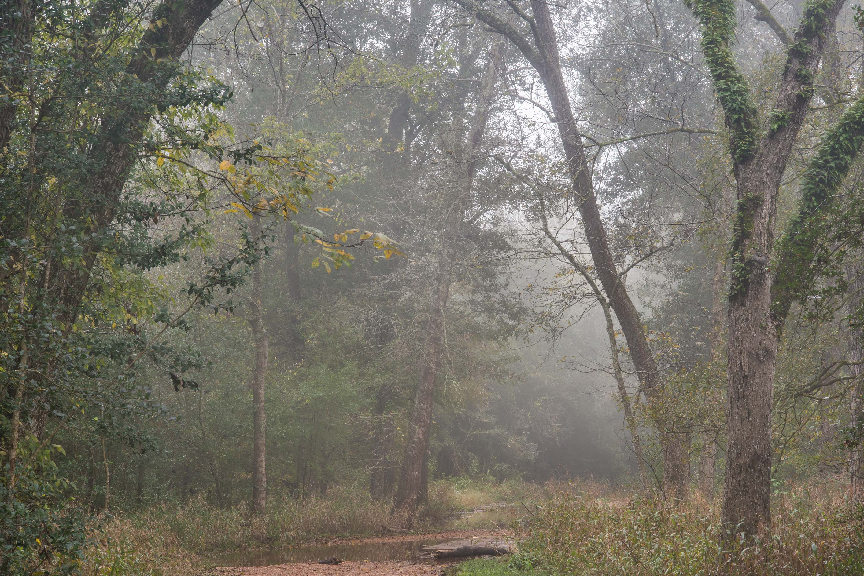 Oxbow area of Raccoon Run Trail in fog in Lick Creek Park. College Station, Texas