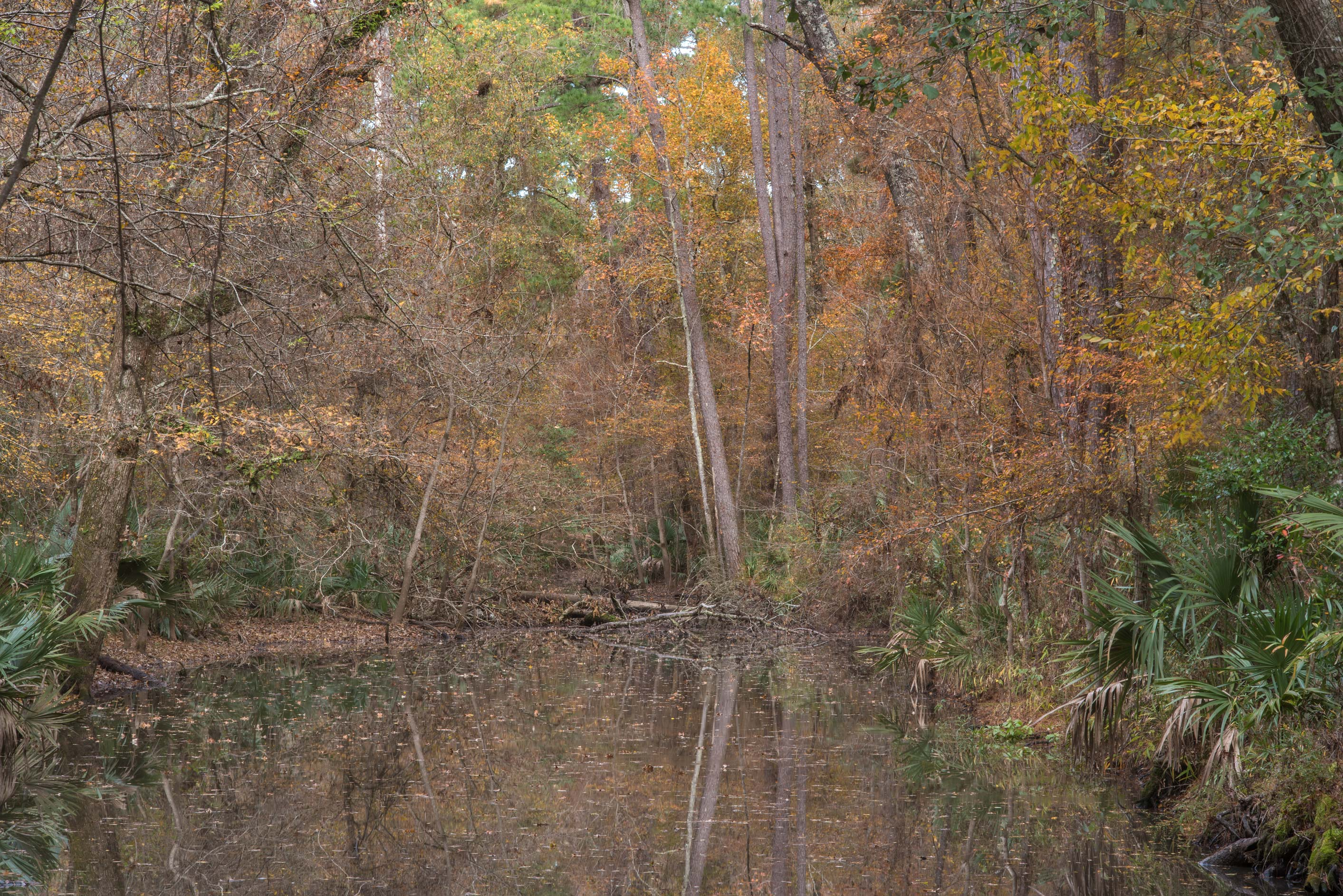 Reflections in an oxbow on Winters Bayou Trail in...National Forest. Cleveland, Texas