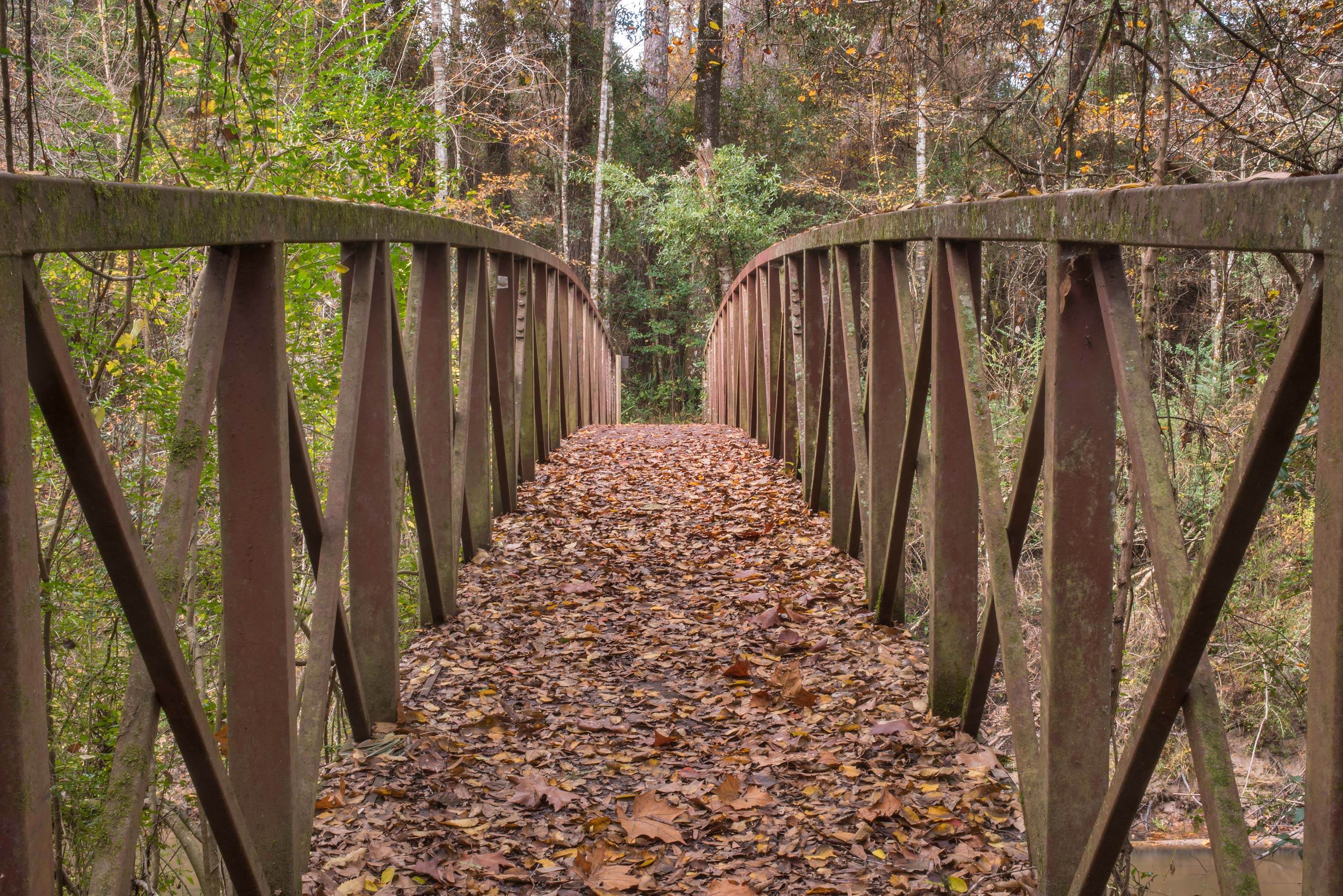 Bridge with dry leaves on Winters Bayou Trail in...National Forest. Cleveland, Texas