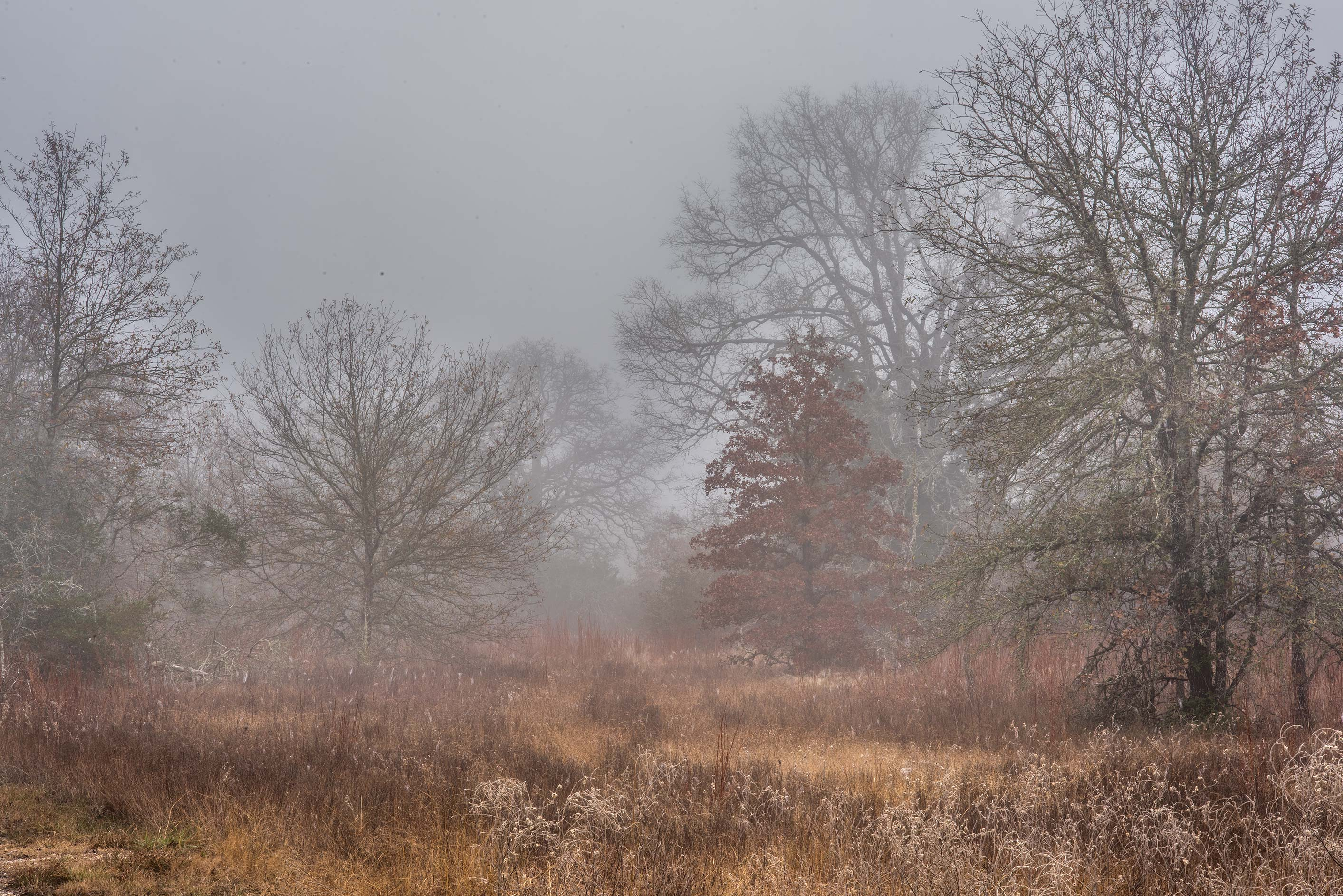 Prairie in fog in Lick Creek Park. College Station, Texas