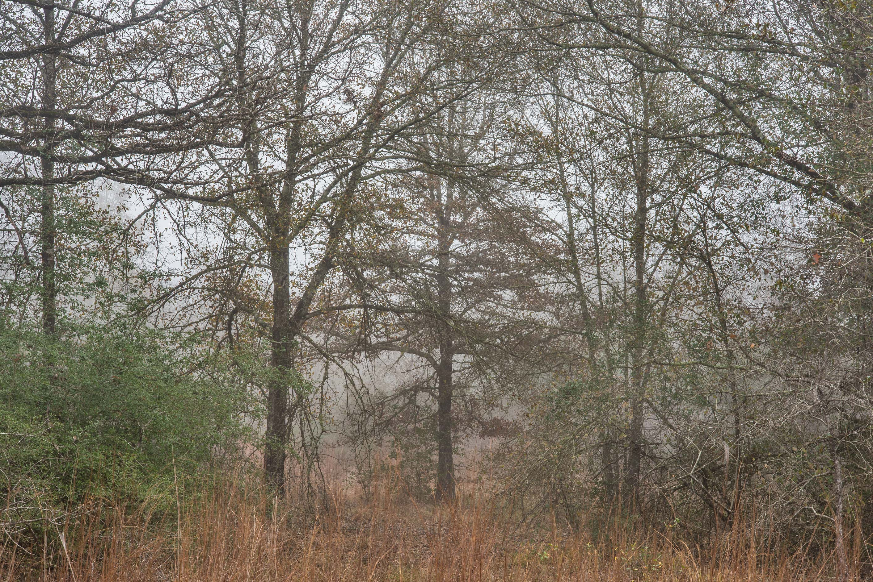 Trees in fog in Lick Creek Park. College Station, Texas