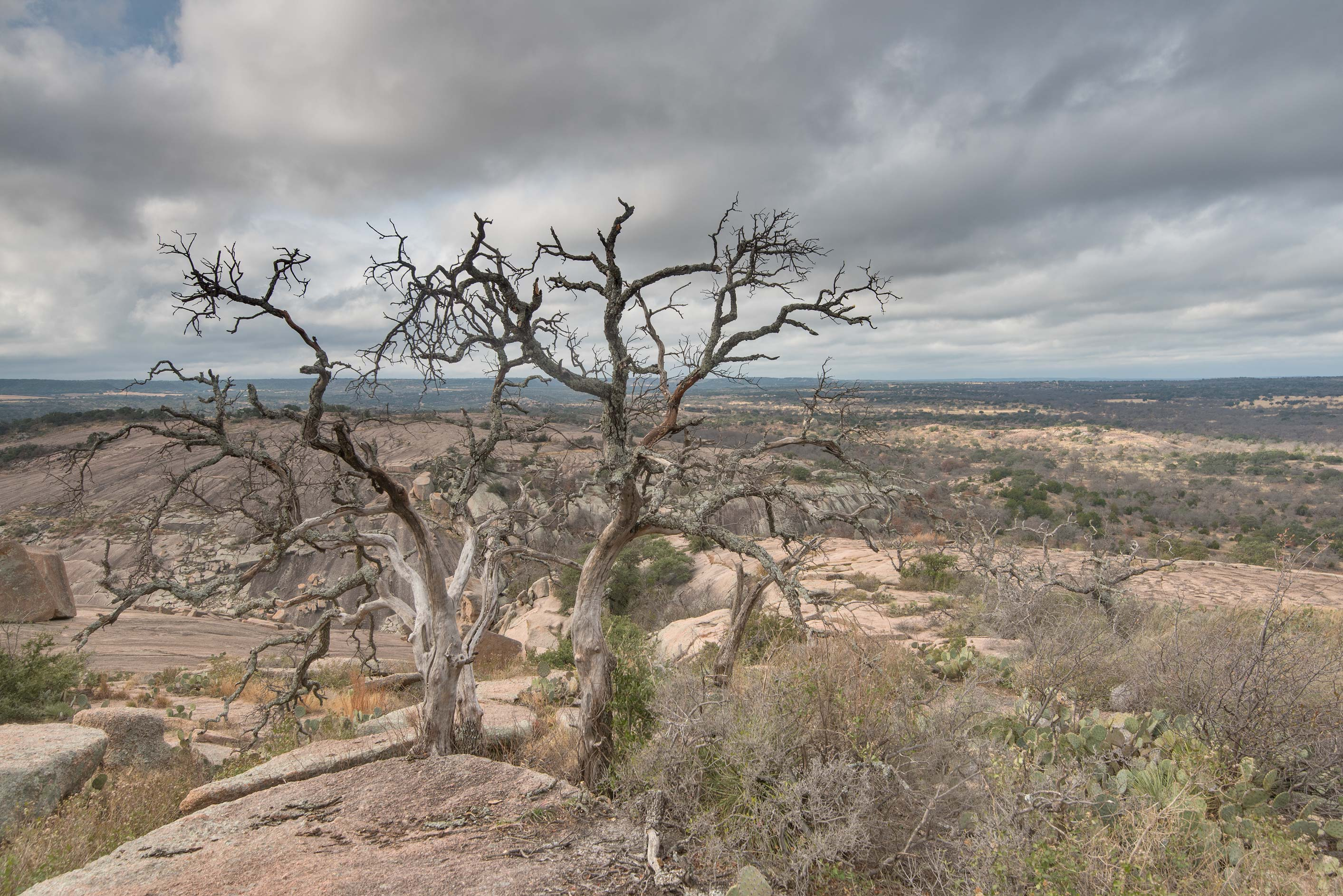Dry trees in Enchanted Rock State Natural Area. Fredericksburg, Texas