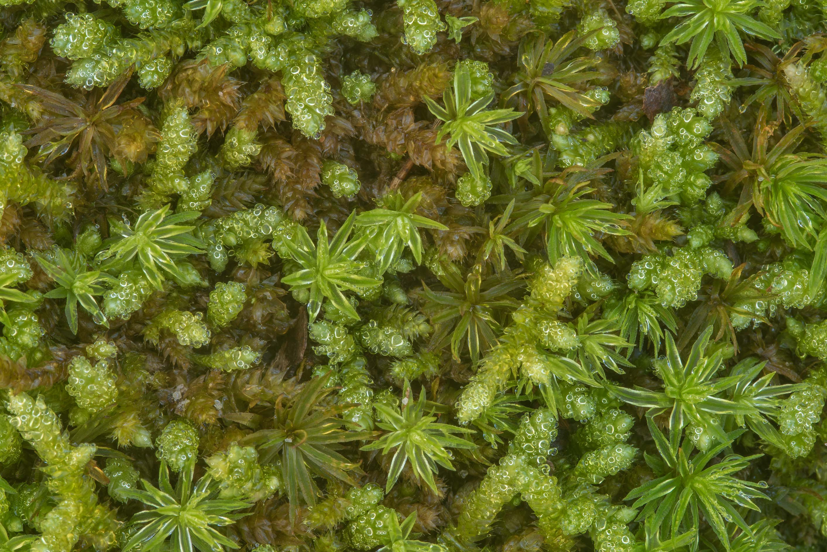 Mosses on the ground in Big Creek Scenic Area of...National Forest. Shepherd, Texas