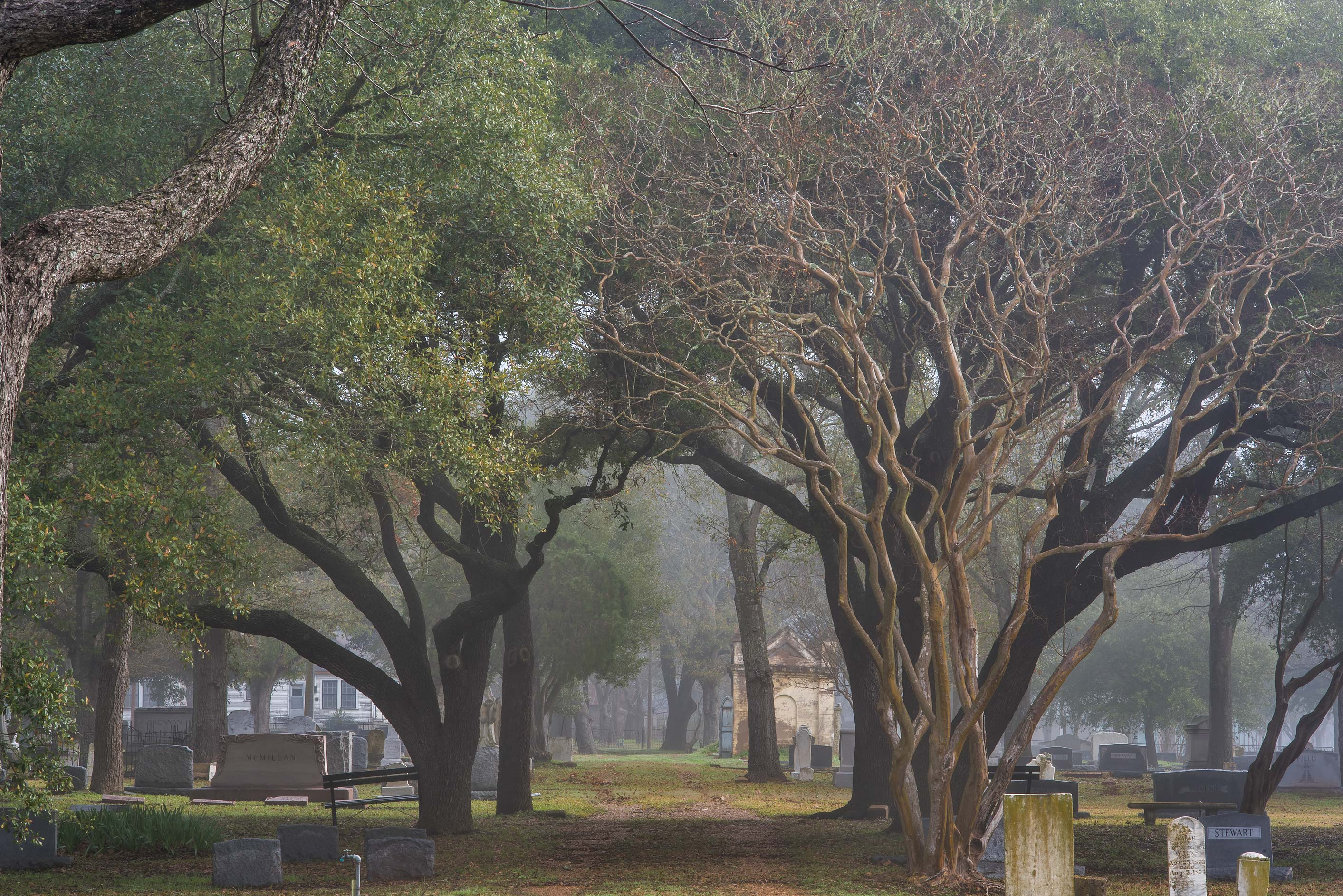 Alley in Calvert Cemetery in mist. Calvert, Texas