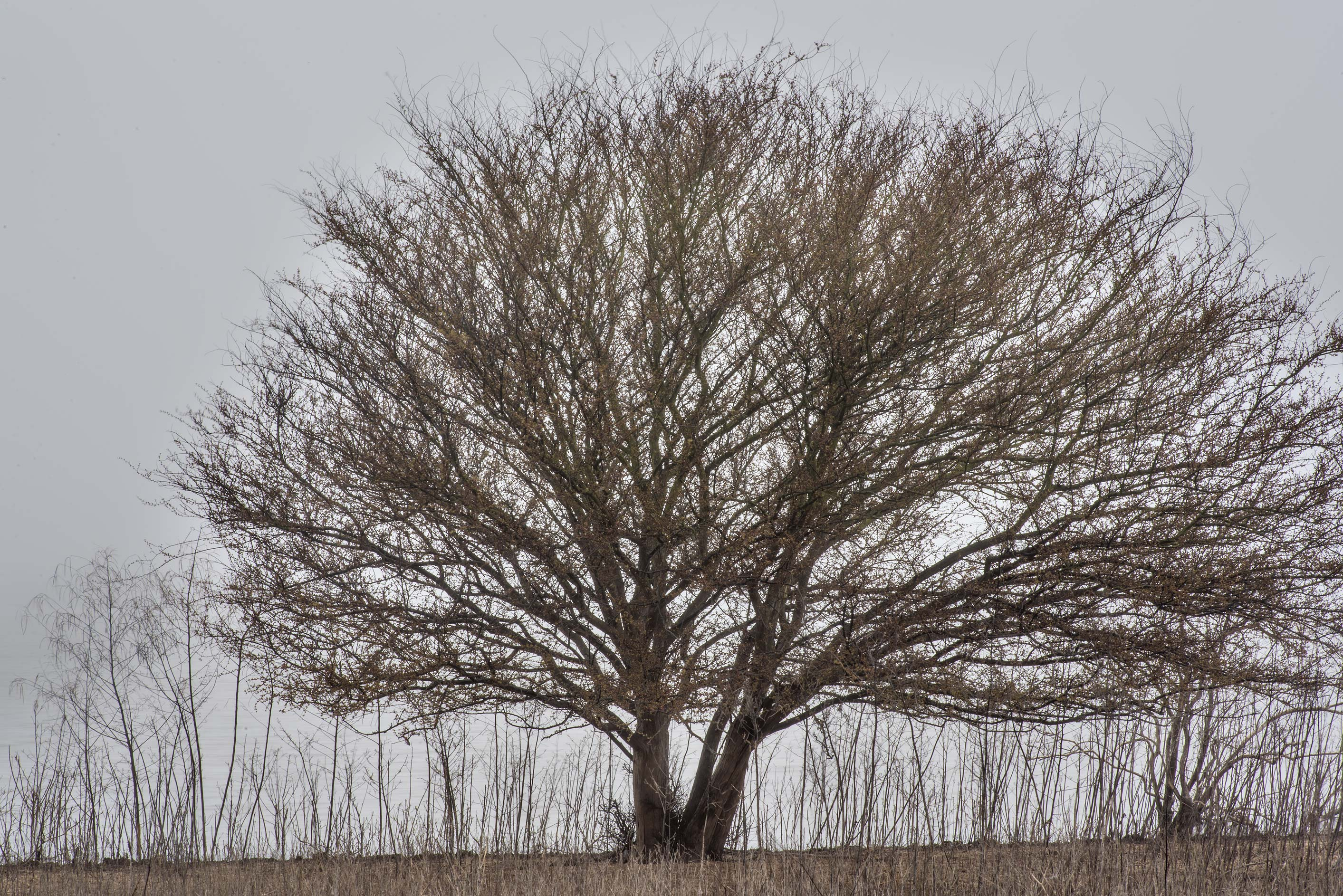 A tree near the lake at Lake Somerville Trailway...of Somerville Lake State Park. Texas