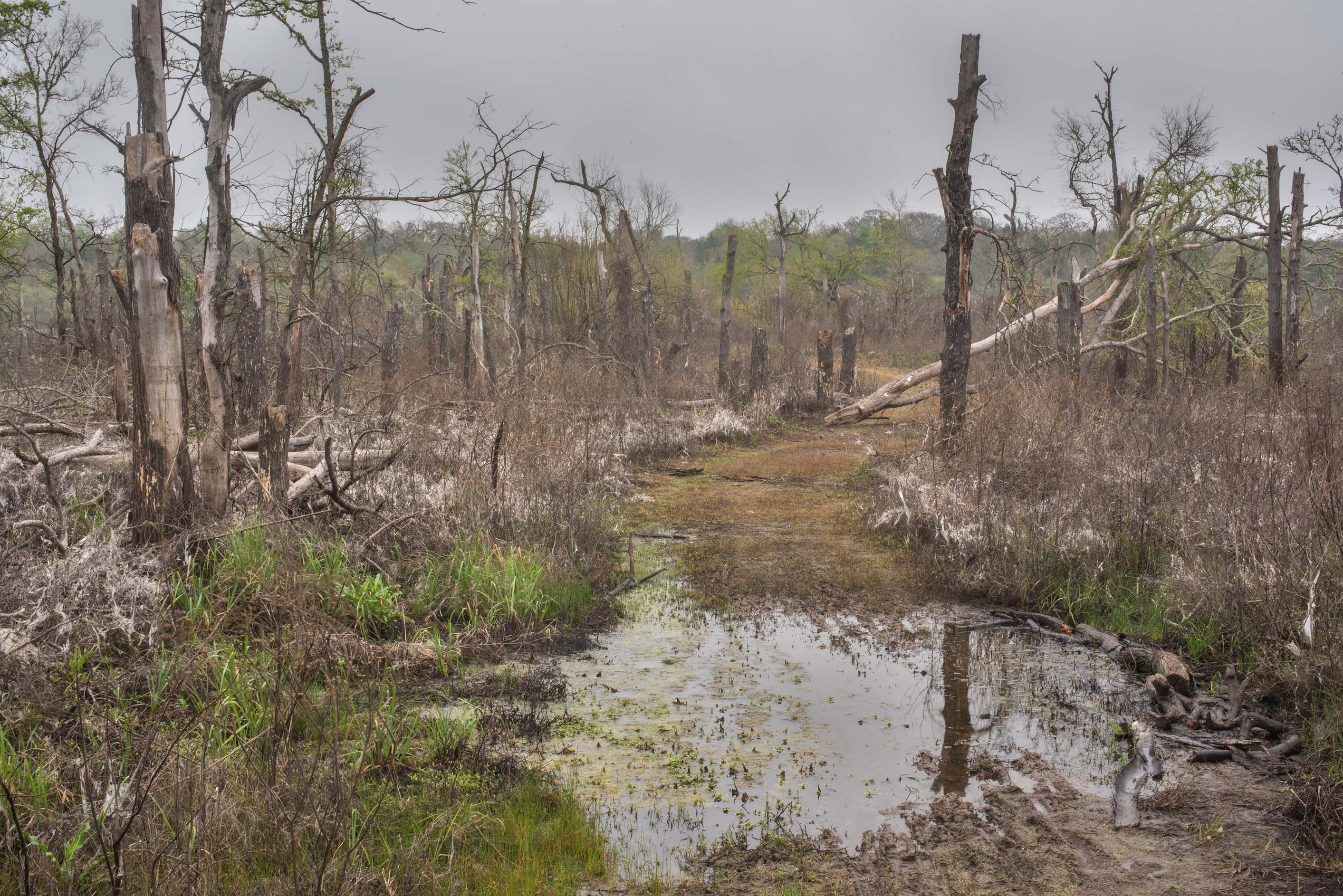 Swampy place at Lake Somerville Trailway near...of Somerville Lake State Park. Texas