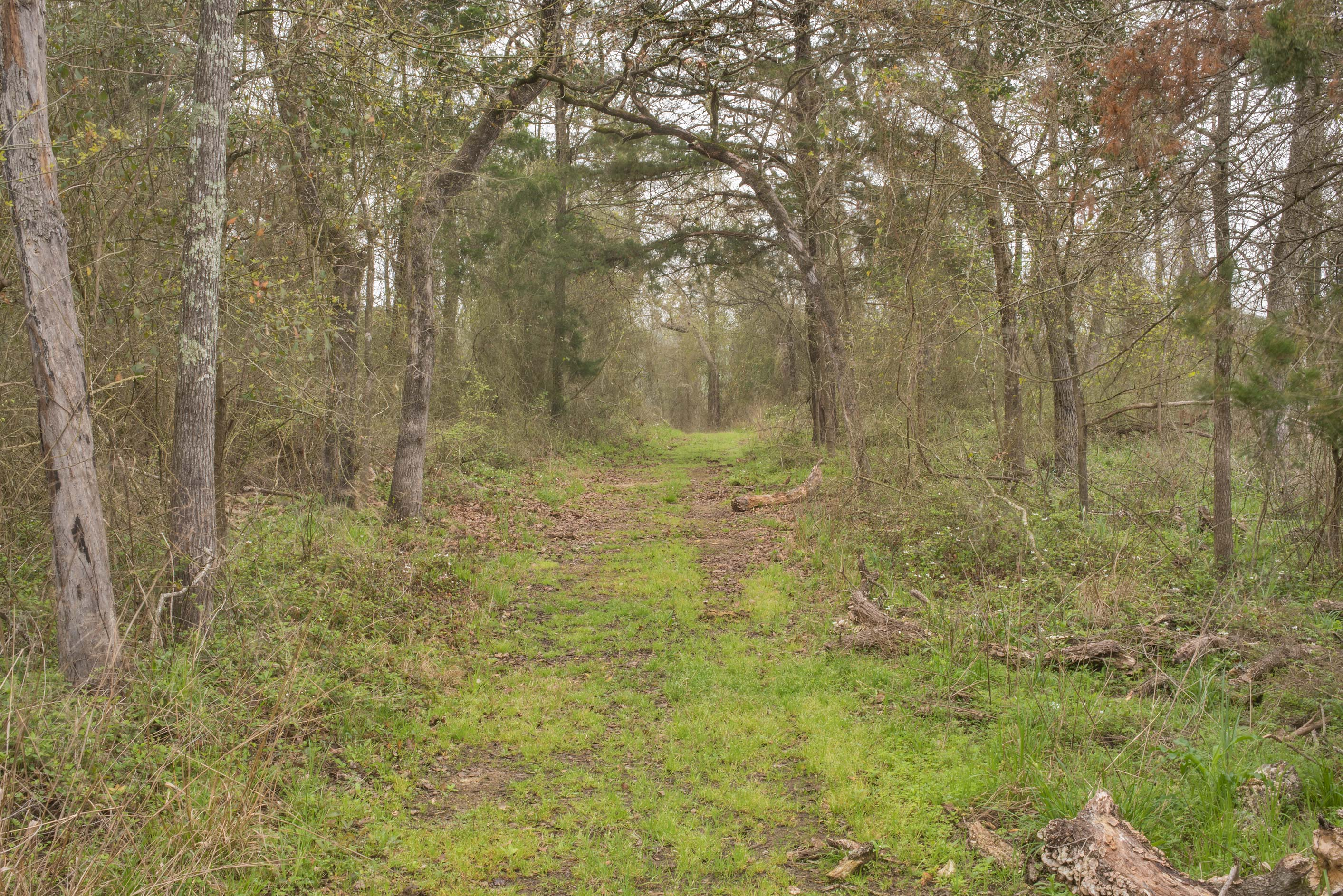 Oak forest at Lake Somerville Trailway near Birch...of Somerville Lake State Park. Texas