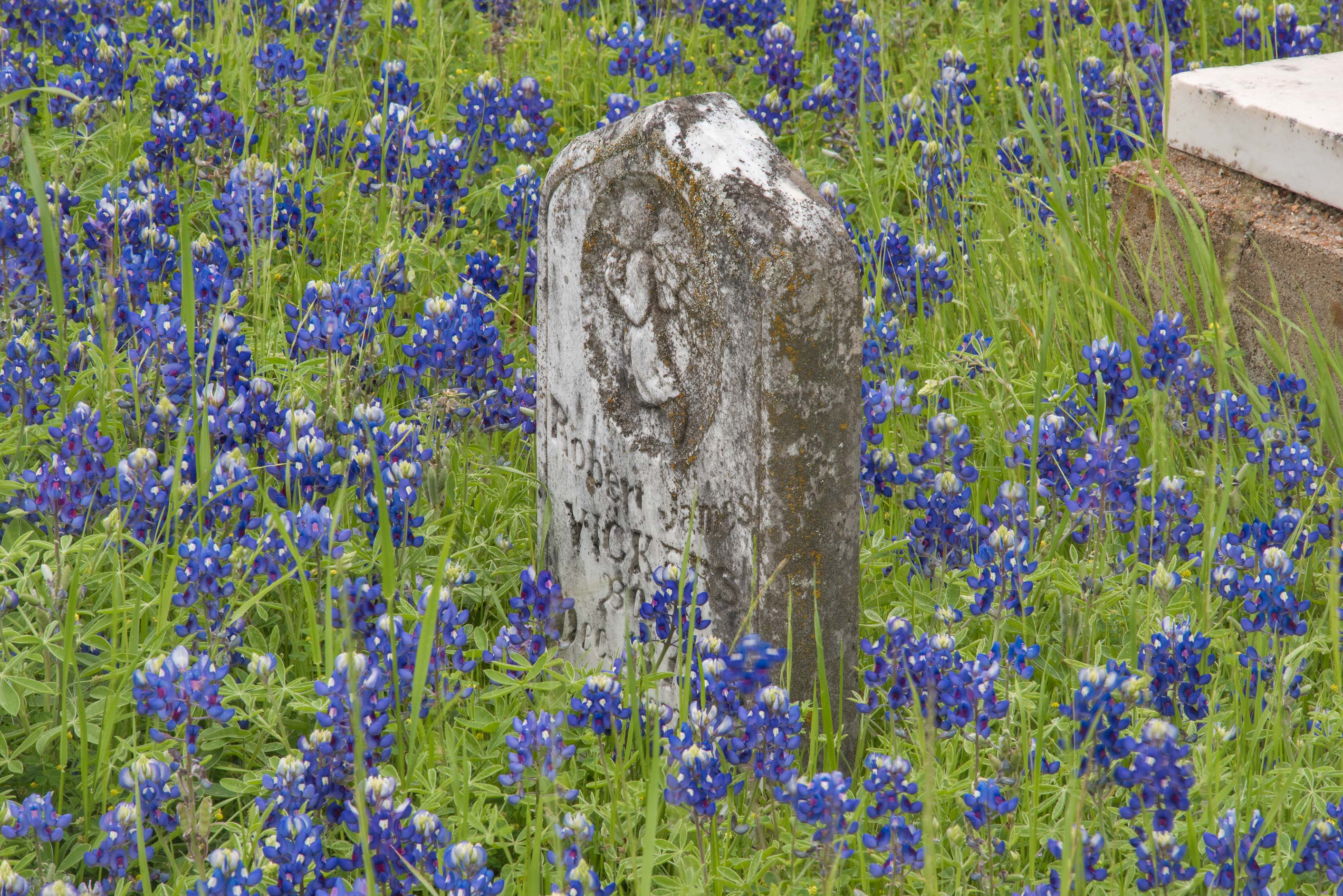 Children's tomb with bluebonnets in Historic...Cemetery near Independence. Texas