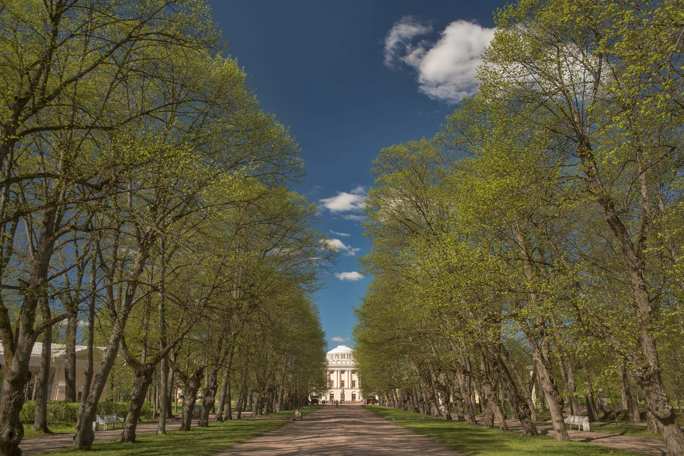 Triple linden alley and a palace in Pavlovsk Park...a suburb of St.Petersburg, Russia