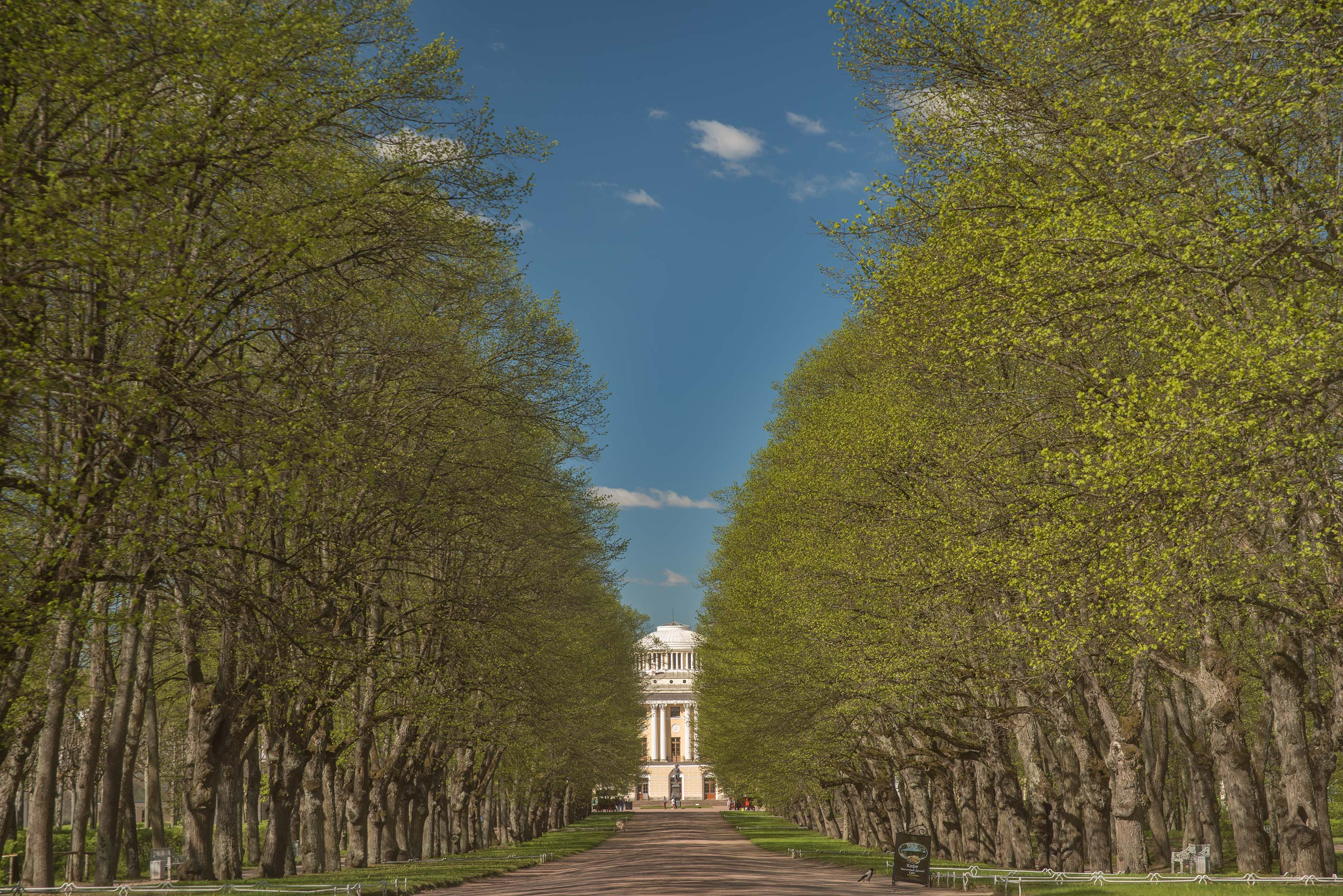 Triple linden alley in Pavlovsk Park. Pavlovsk, a suburb of St.Petersburg, Russia