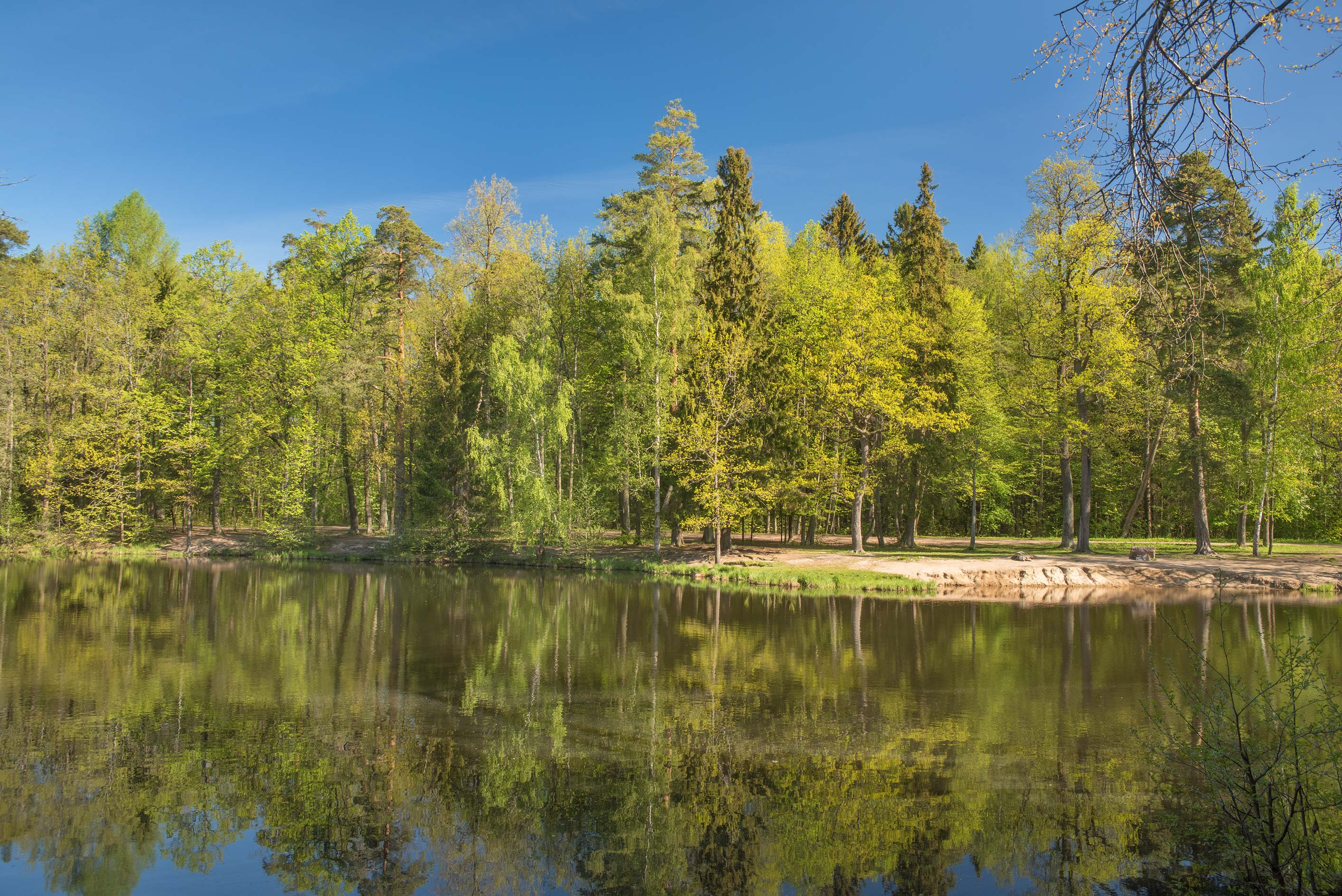 Beach of Kristatelevy Pond in Sergievka Park. Old...west from St.Petersburg, Russia