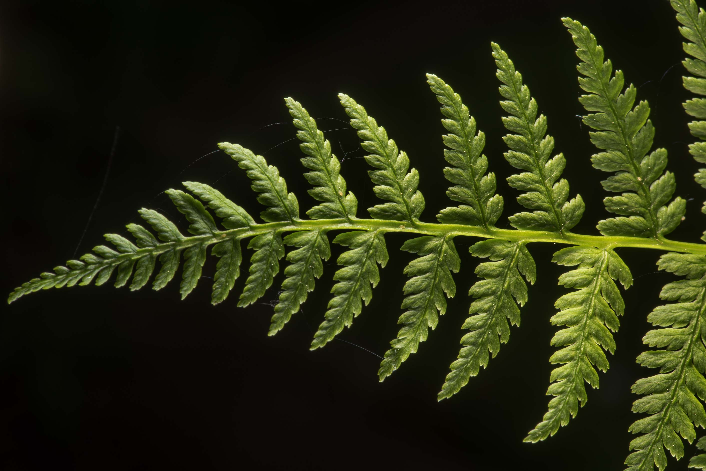 Fern leaf in Sobstvennaya Dacha Park. Old Peterhof, west from St.Petersburg, Russia