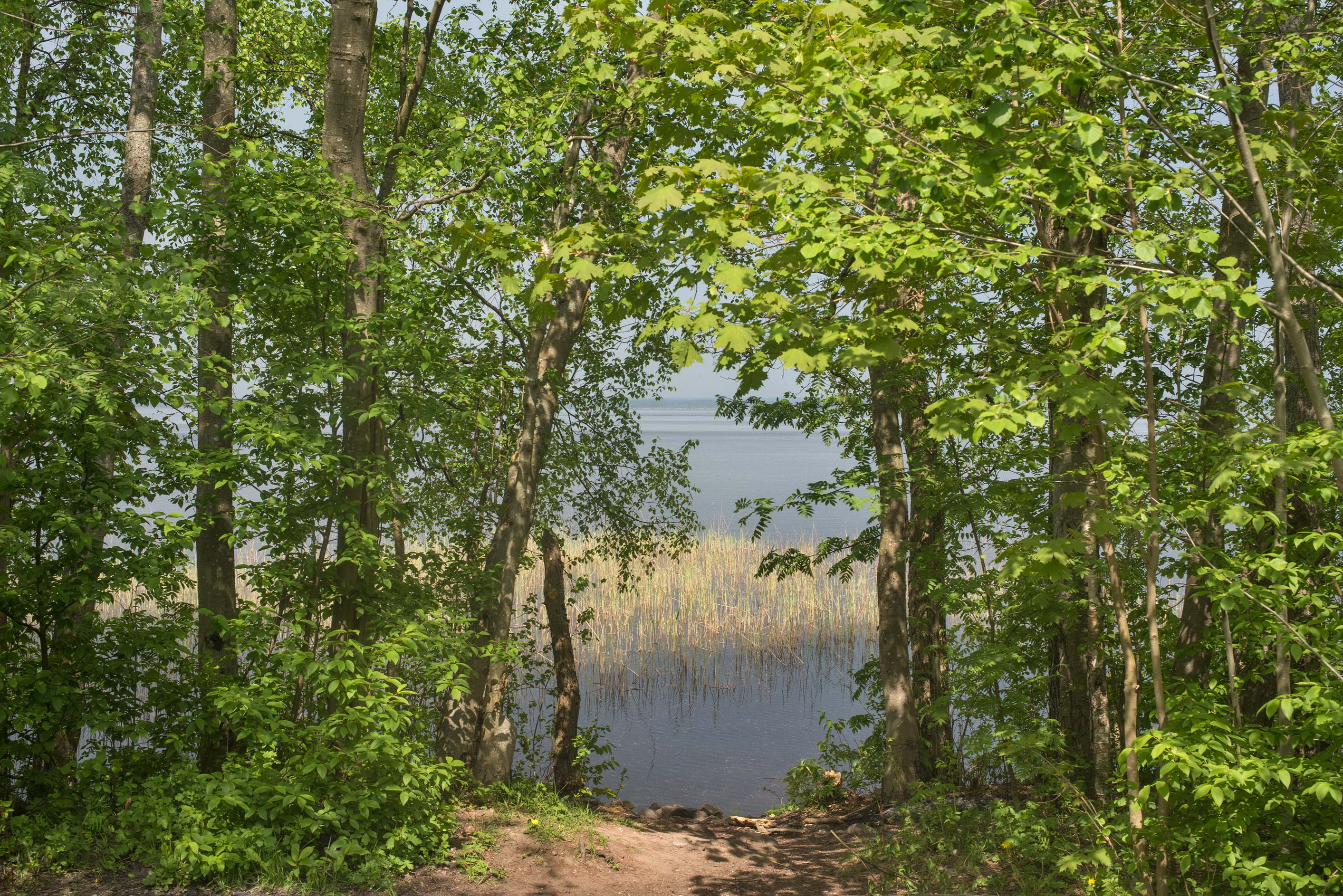 View of Razliv Lake from Lenin Trail in area of...north-west from St.Petersburg, Russia