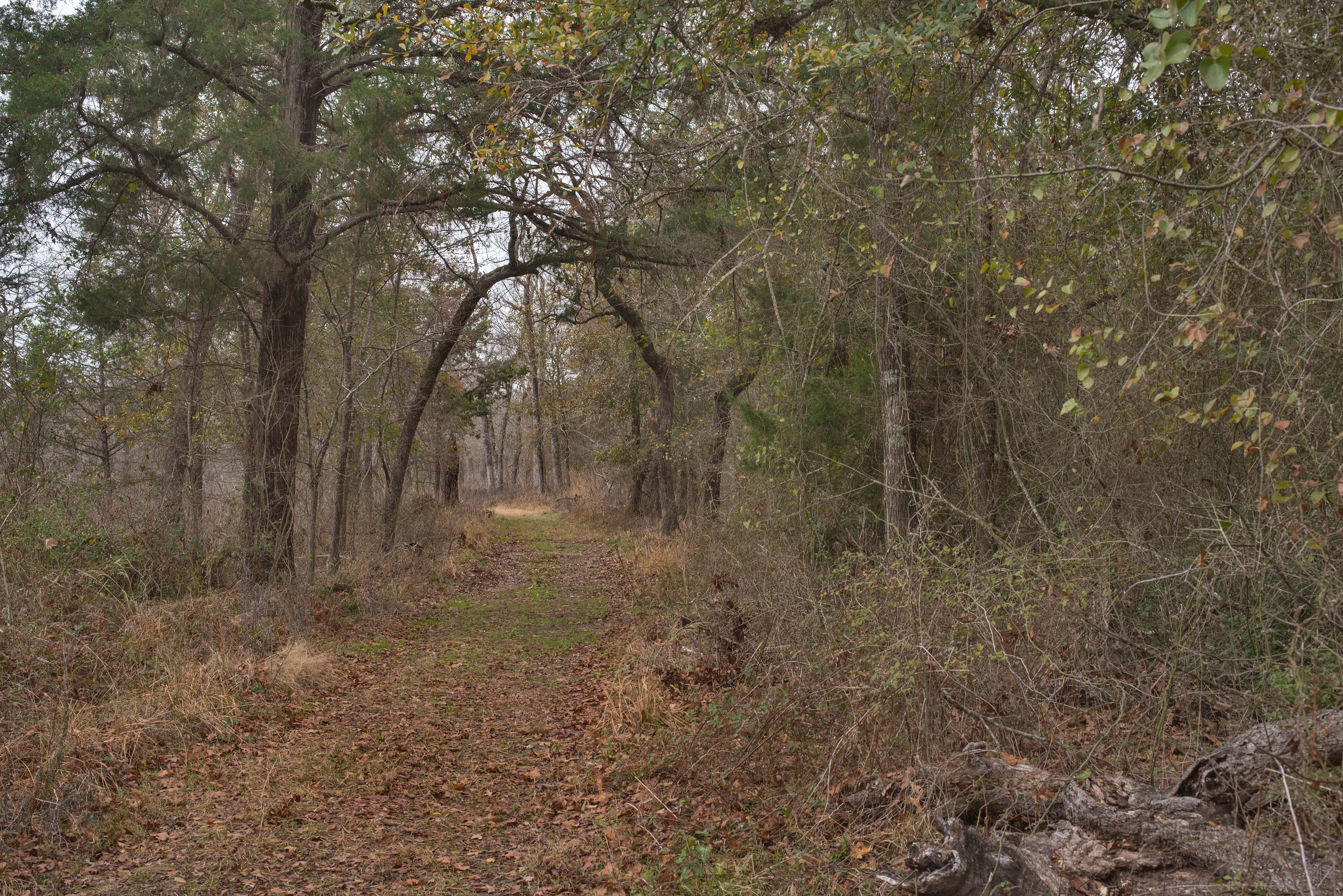 A road at Lake Somerville Trailway near Birch...of Somerville Lake State Park. Texas