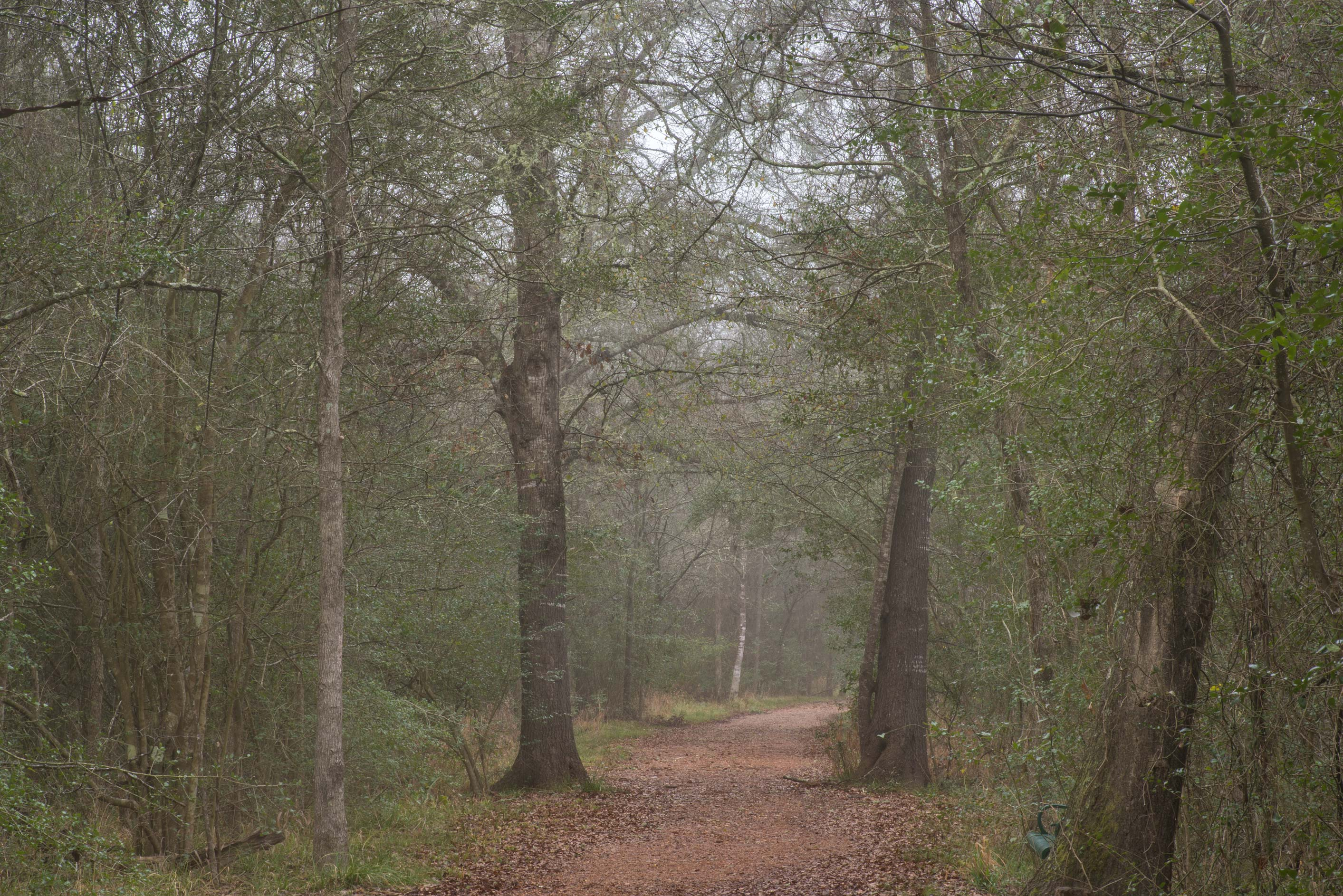 Raccoon Run Trail in mist in Lick Creek Park. College Station, Texas